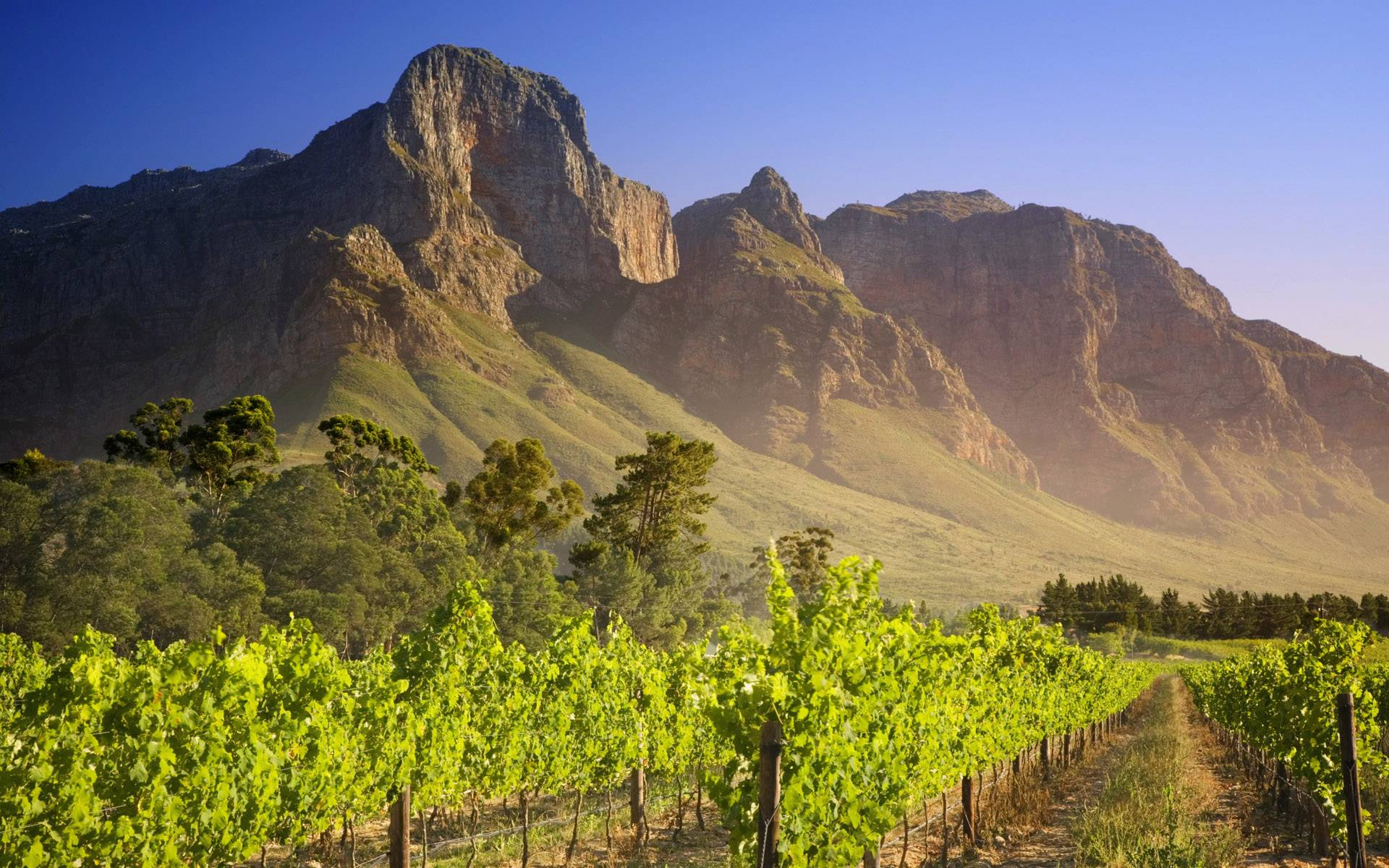 Vineyard South Africa wallpaper - 179928