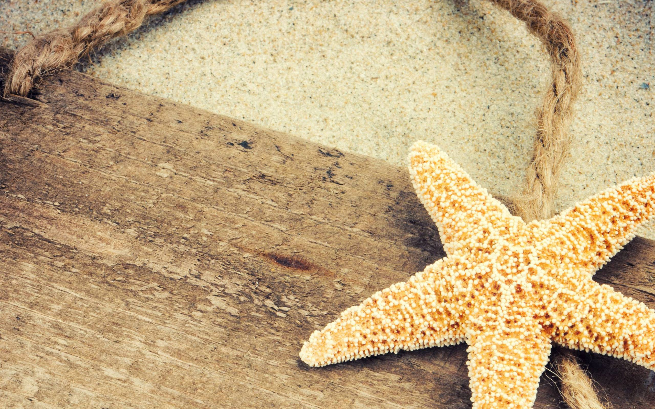 Starfish Backgrounds Wallpaper Cave HD Wallpapers Download Free Images Wallpaper [1000image.com]
