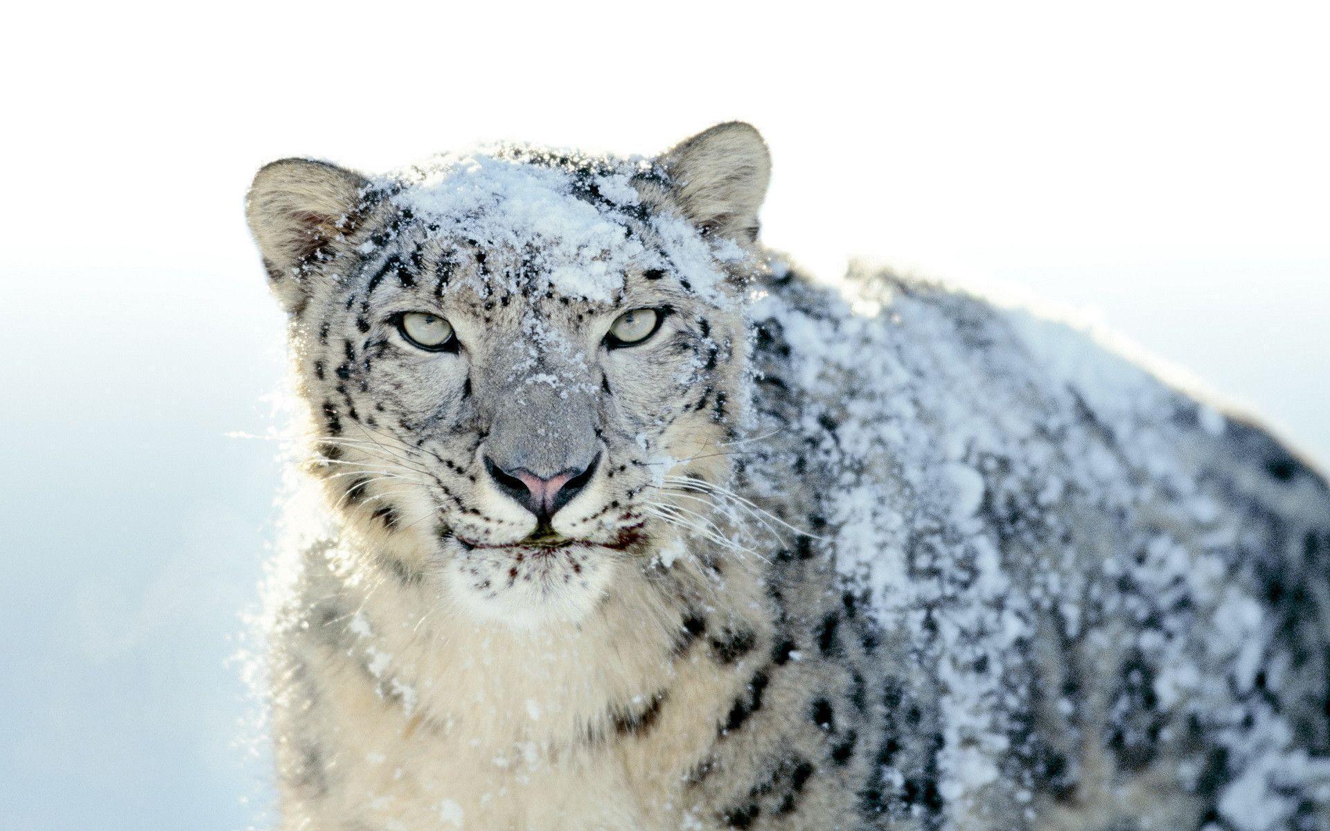 mac os x snow leopard wallpaper 1920x1080