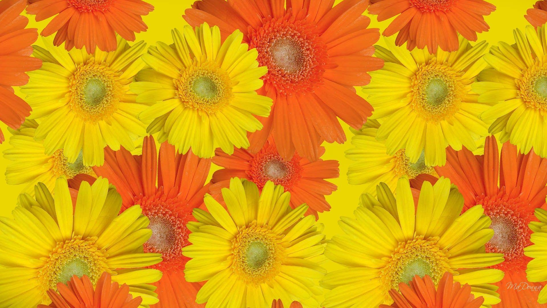 fall flowers wallpaper by - photo #24
