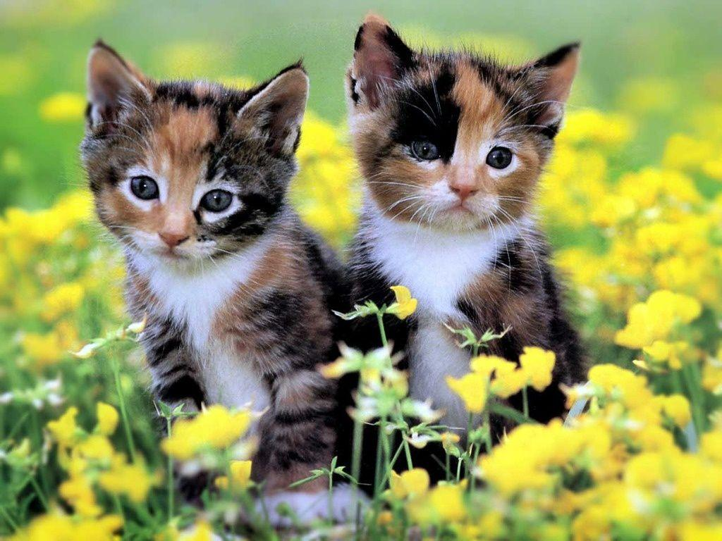 cute cat and puppy pictures