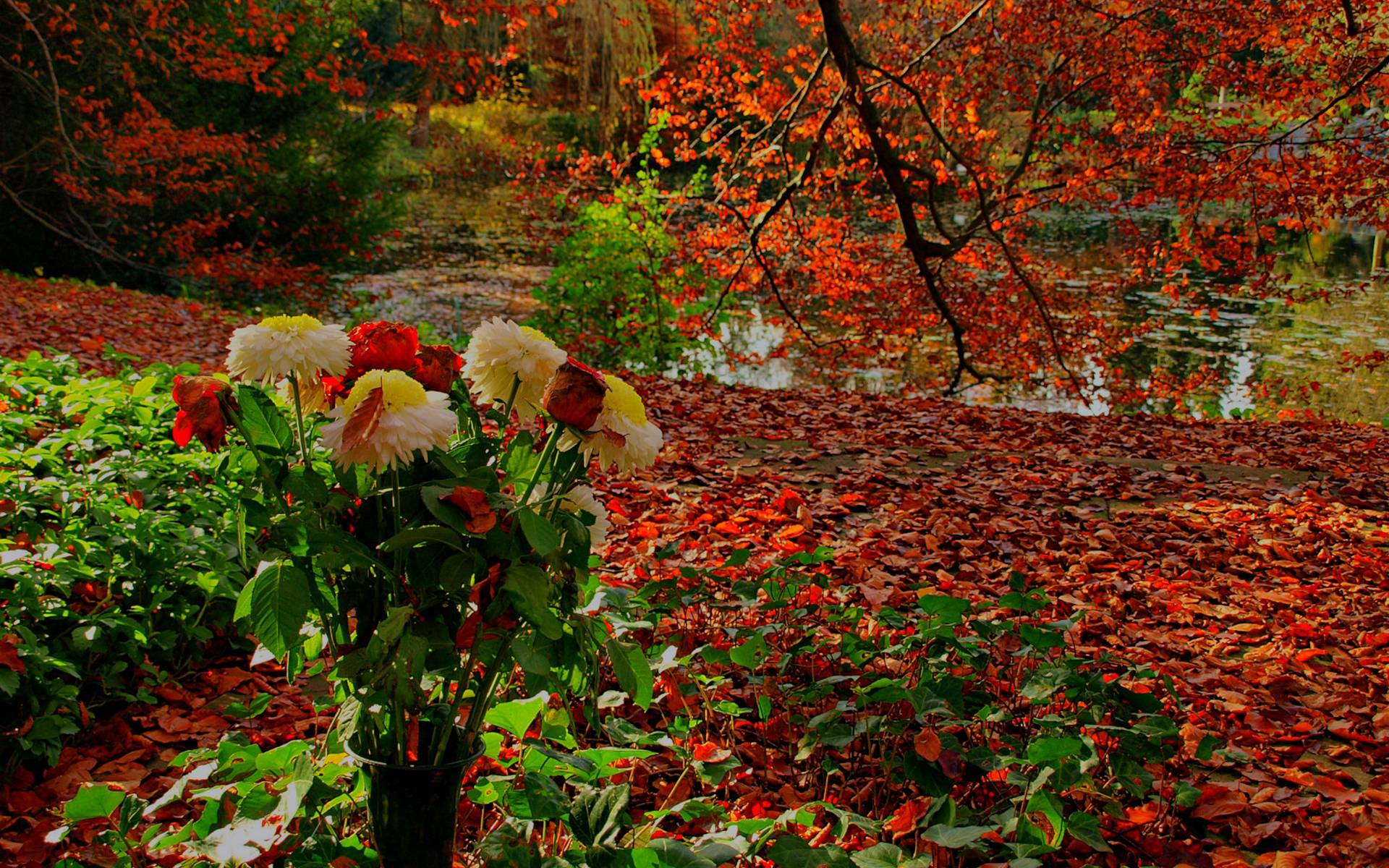fall flowers wallpaper by - photo #15