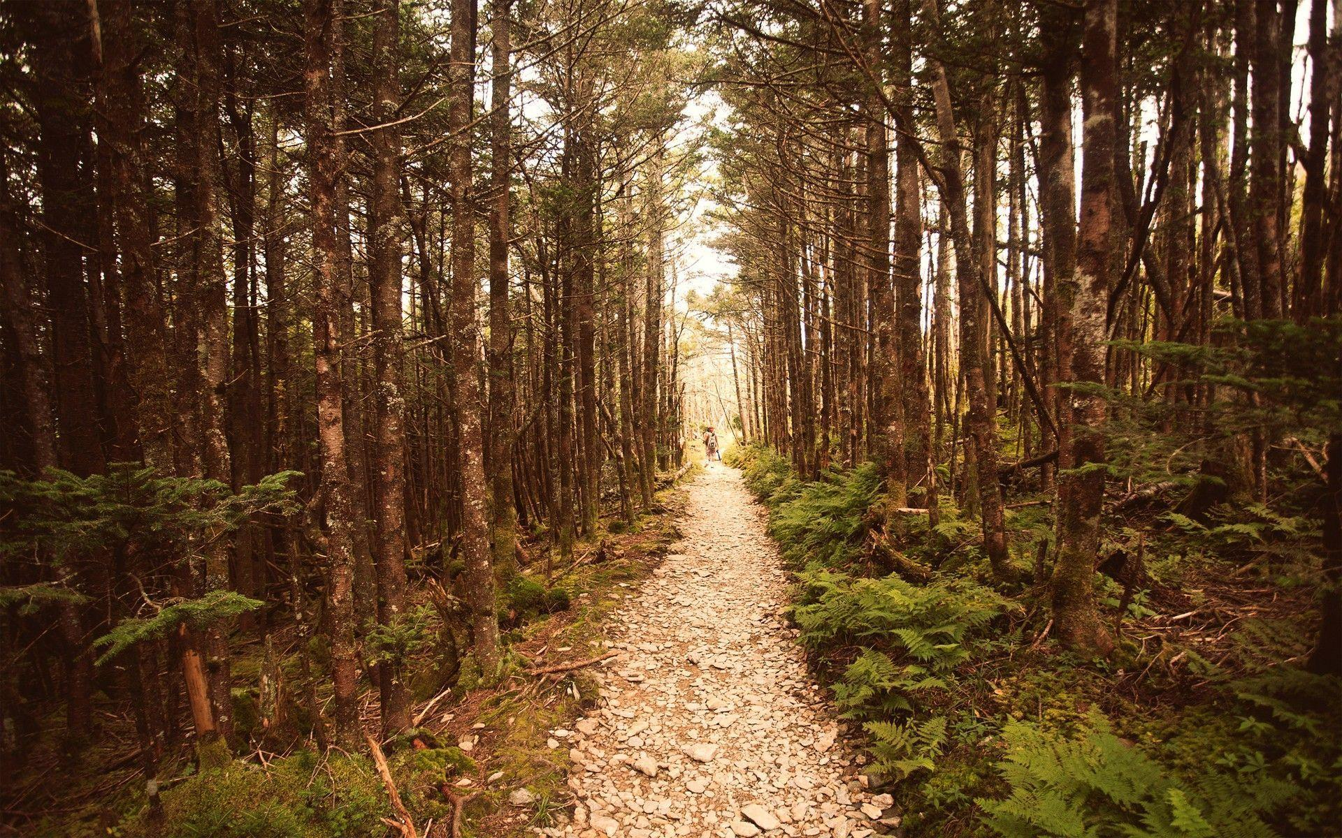 nature forest woods - photo #35