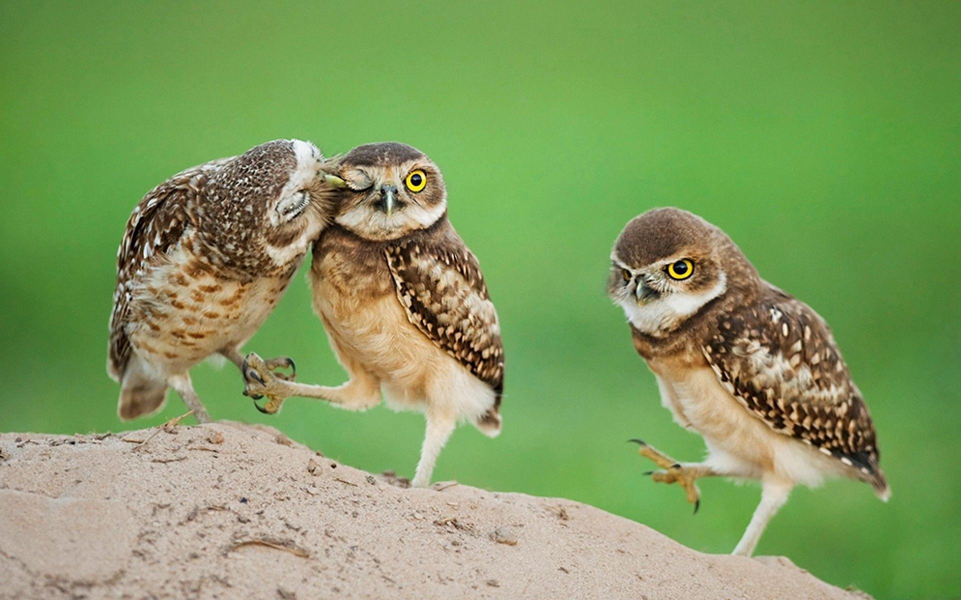 Wallpapers For > Baby Owl Desktop Wallpaper