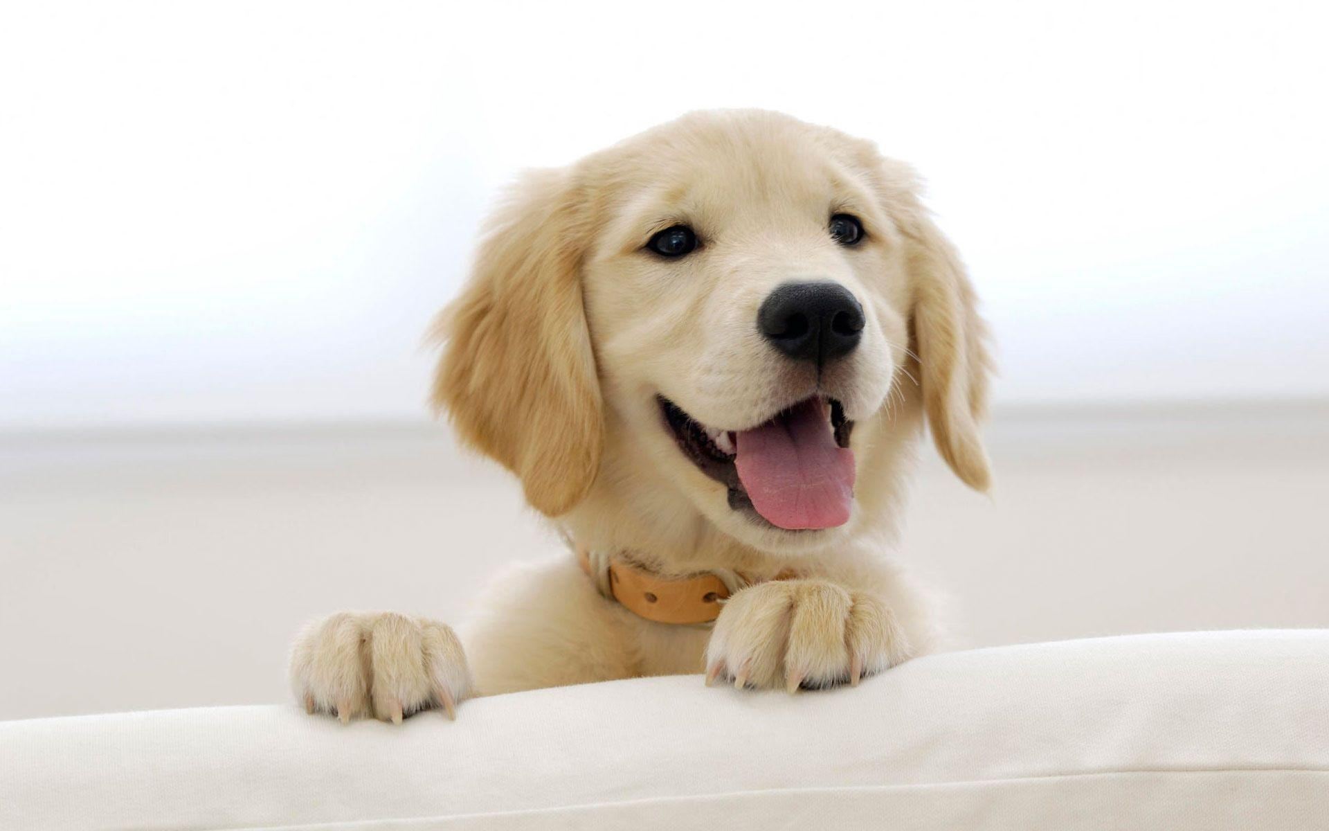 Wallpapers For > Cute Dog Wallpapers