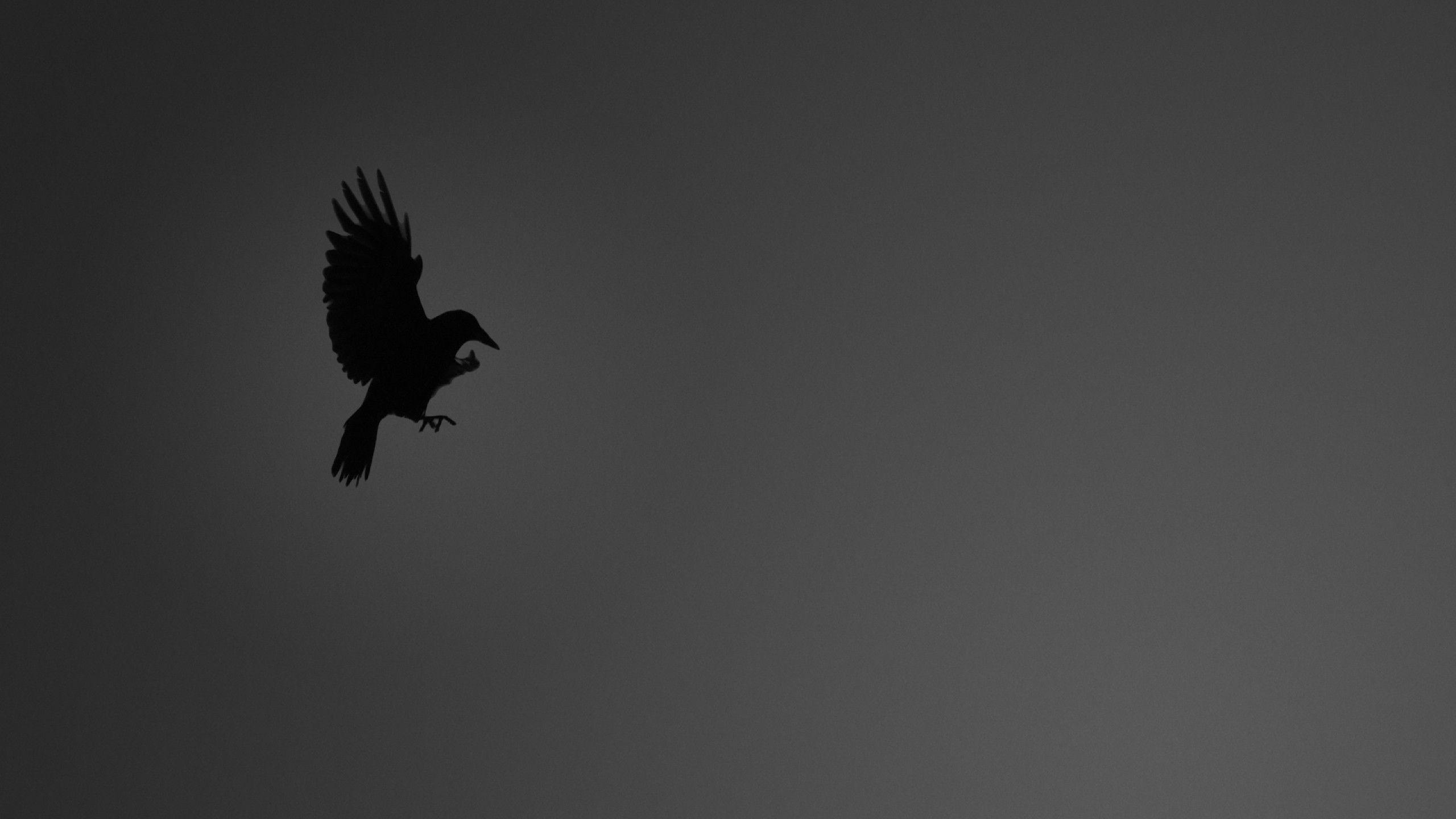 Black Crow Wallpaper DESEMBARALHE