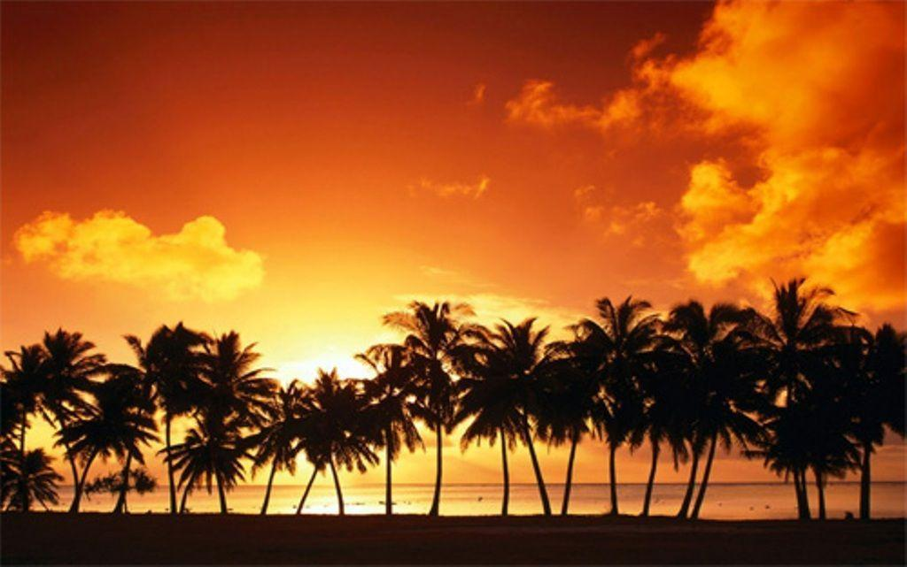 Palm Tree Sunset Background Desktop Background | Desktop ...