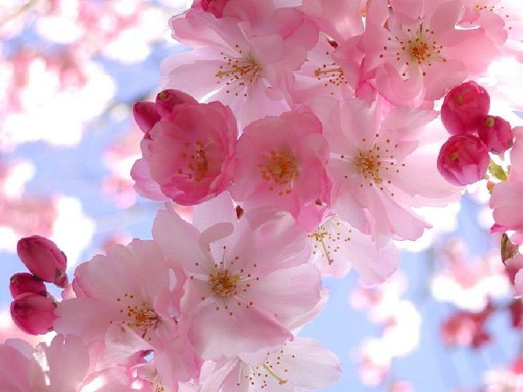Free Downloadable Spring Pictures For Desktop