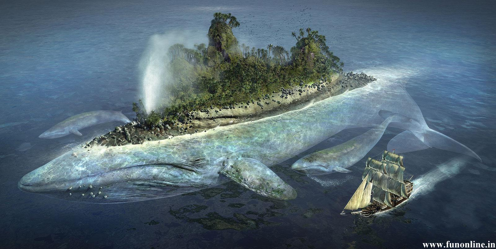 Blue Whale Wallpapers