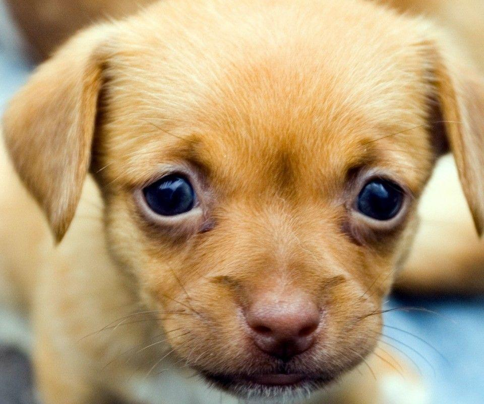 Pix For > Cute Dogs And Puppies Wallpapers