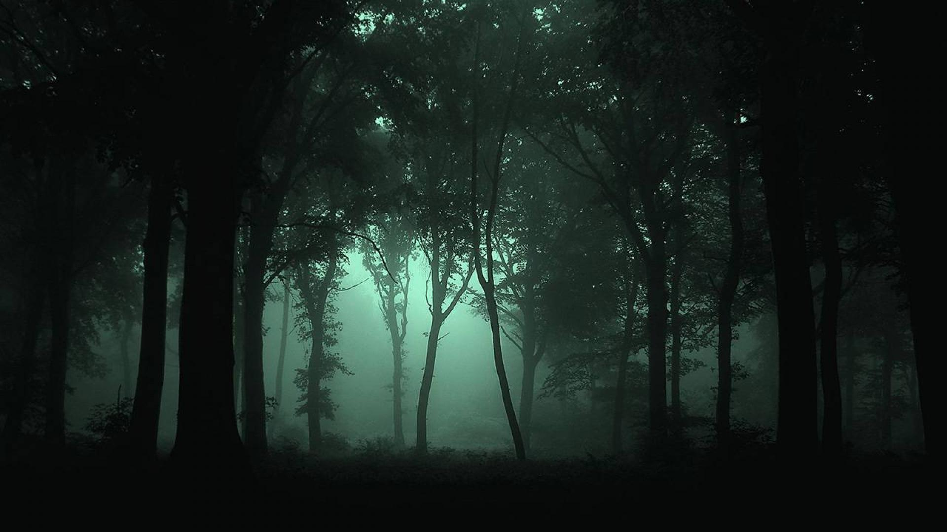 dark places forest trees - photo #10