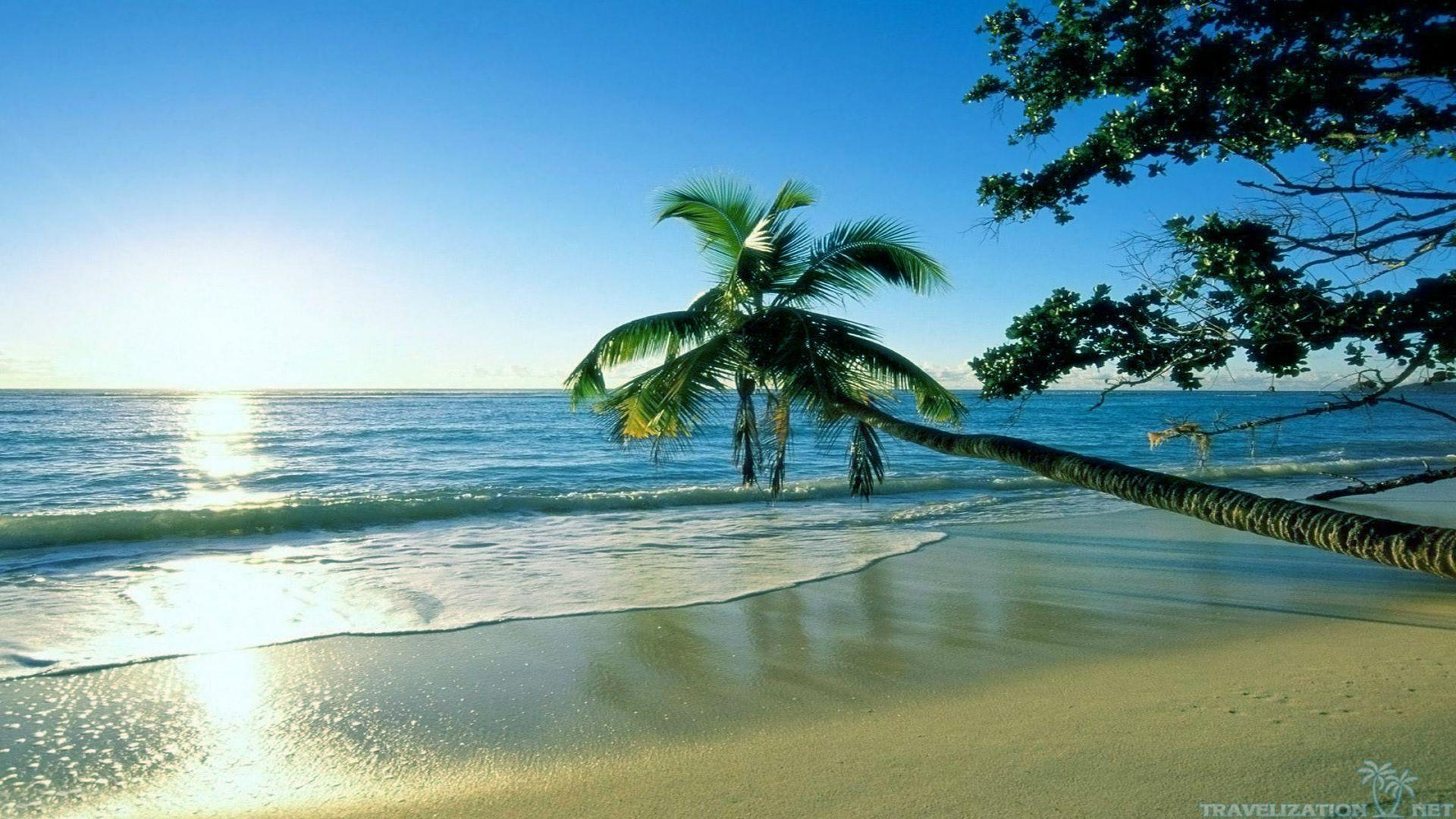 Summer Background Download Free Awesome Wallpapers For