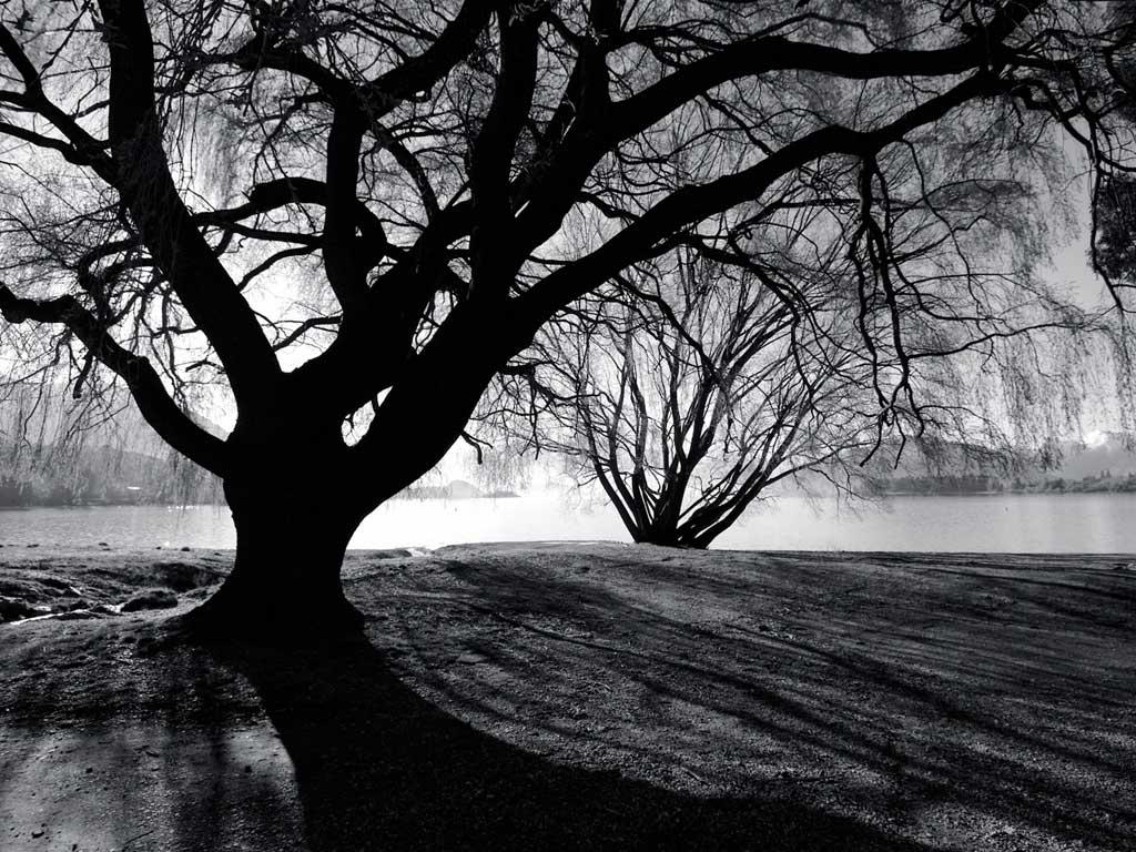 tree desktop background - photo #37