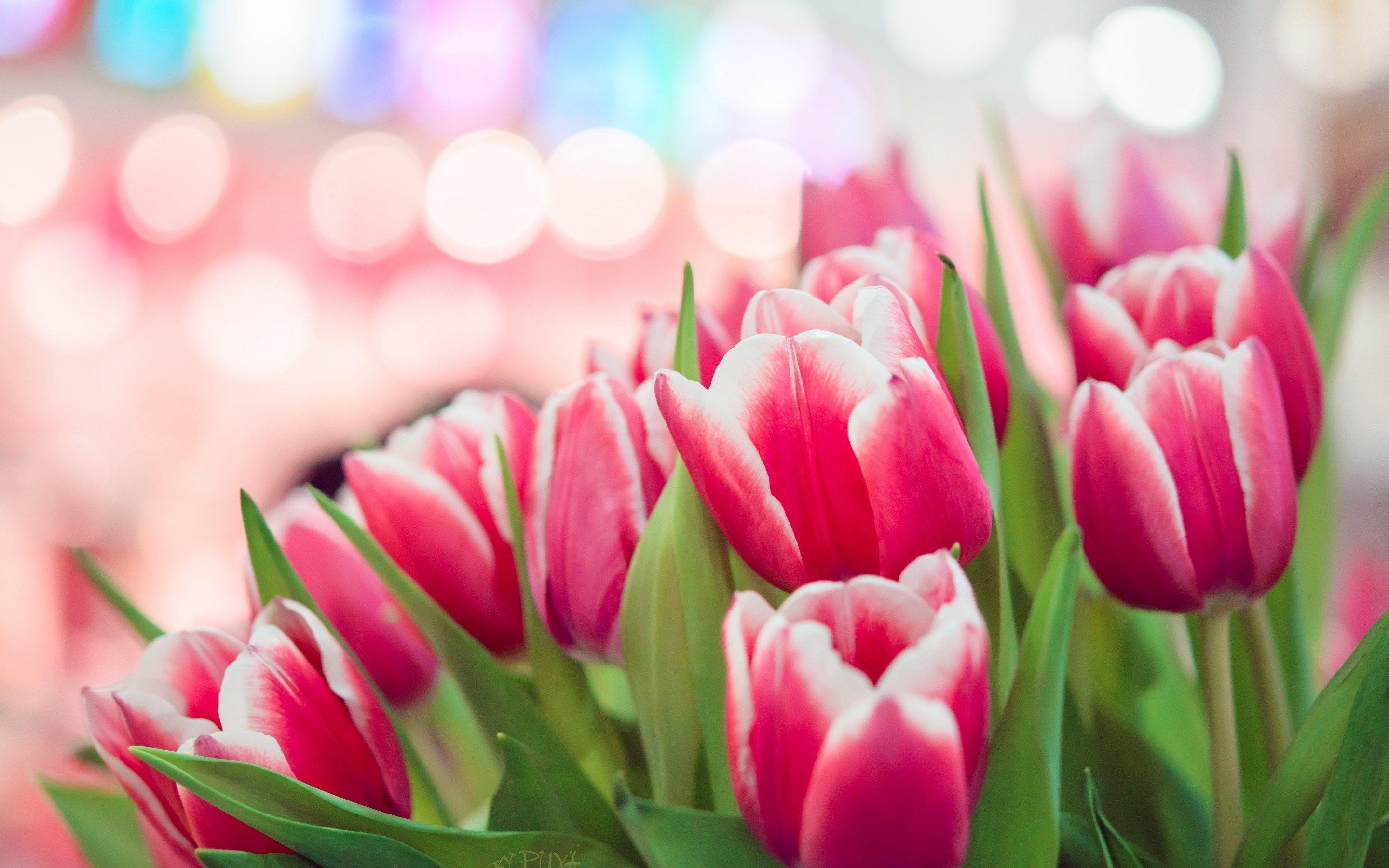 spring city tulips wallpaper - photo #14