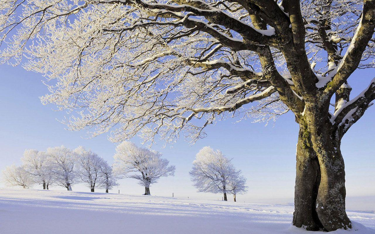 Beautiful Snow Nature Wallpapers