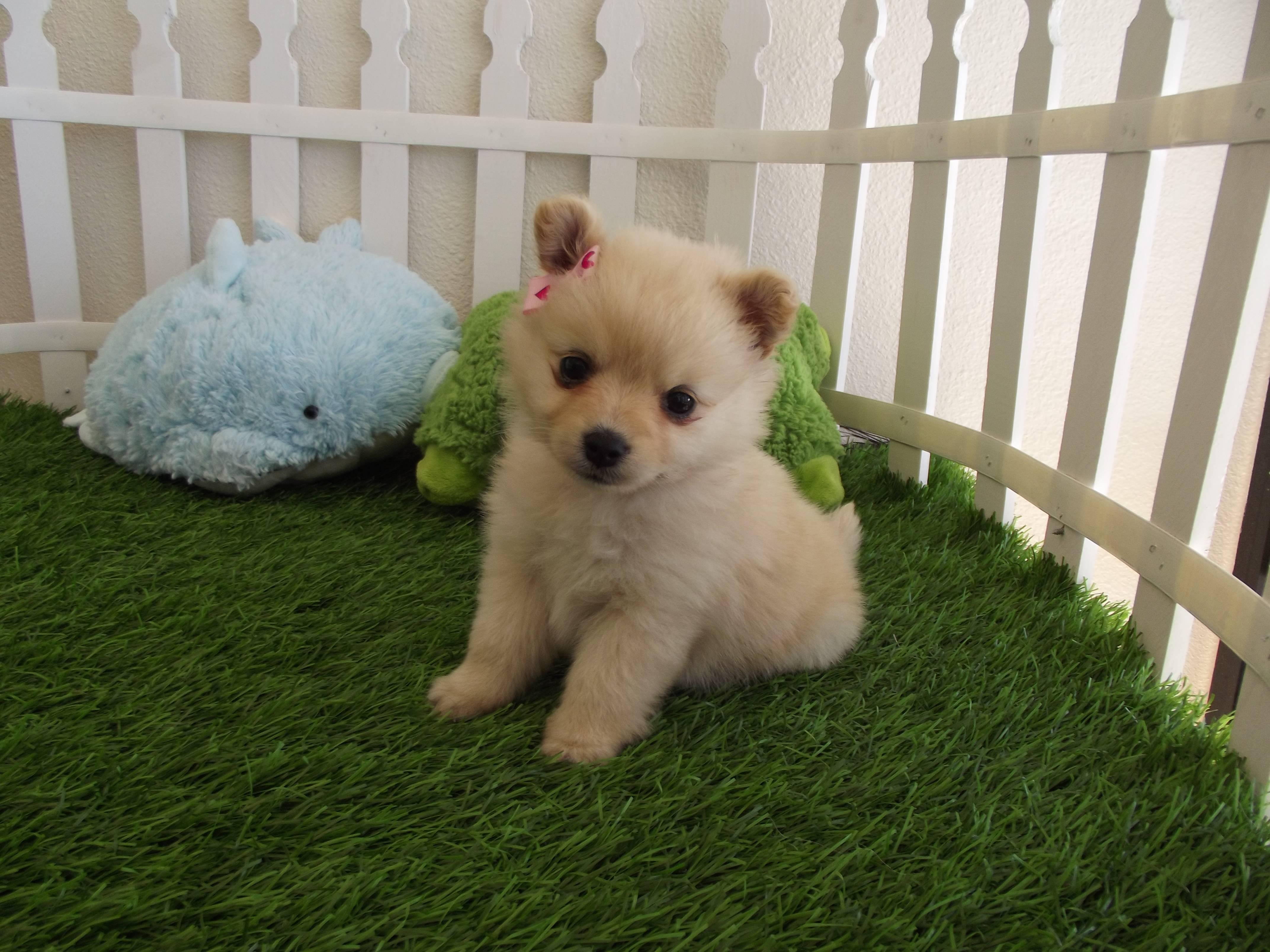 cute puppy wallpapers for desktop wallpaper cave