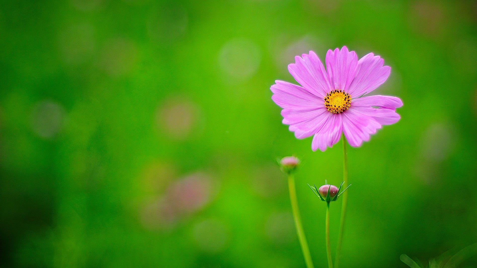 nature flower wallpapers flowers hd