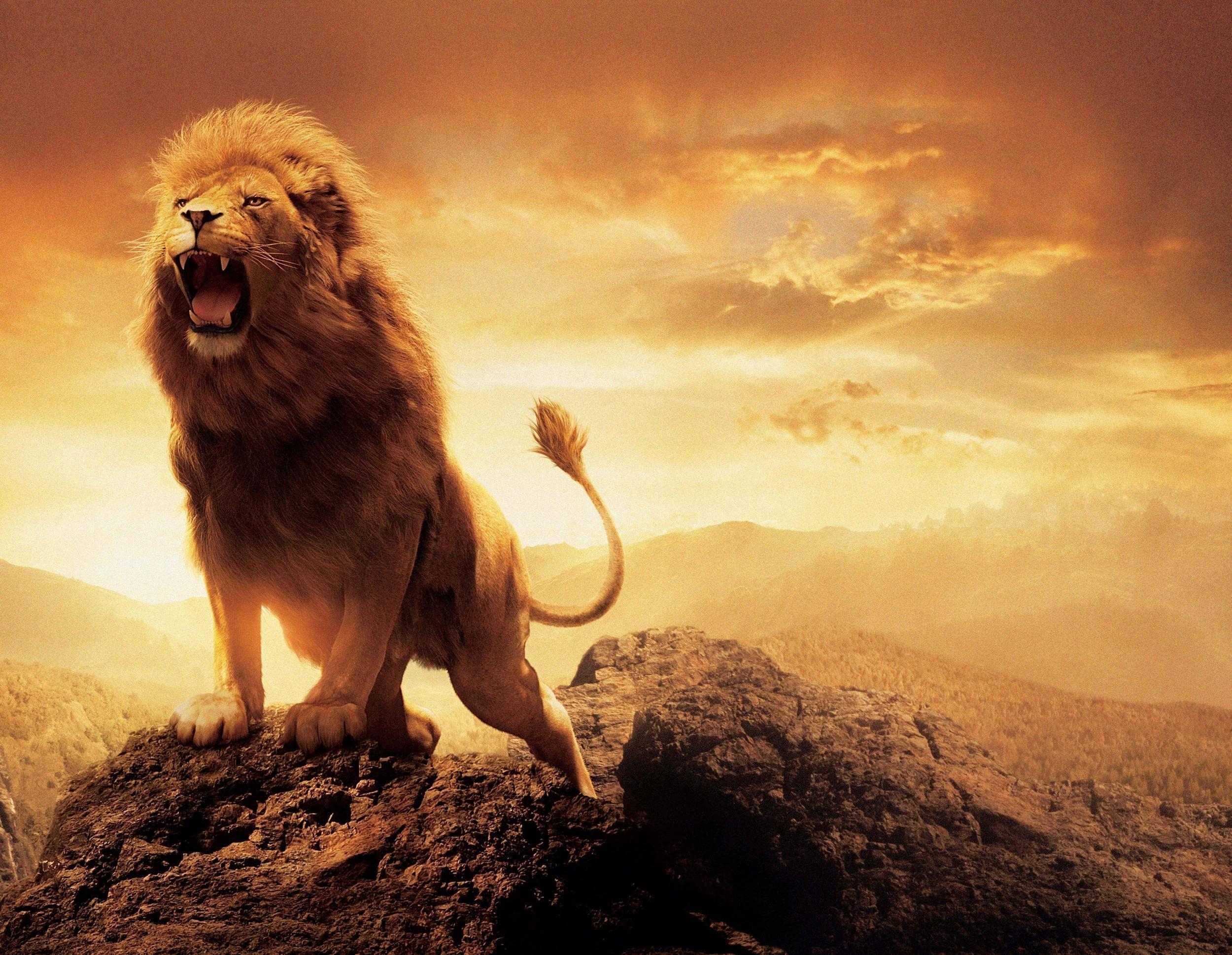 Narnia Aslan Wallpapers - Wallpaper Cave