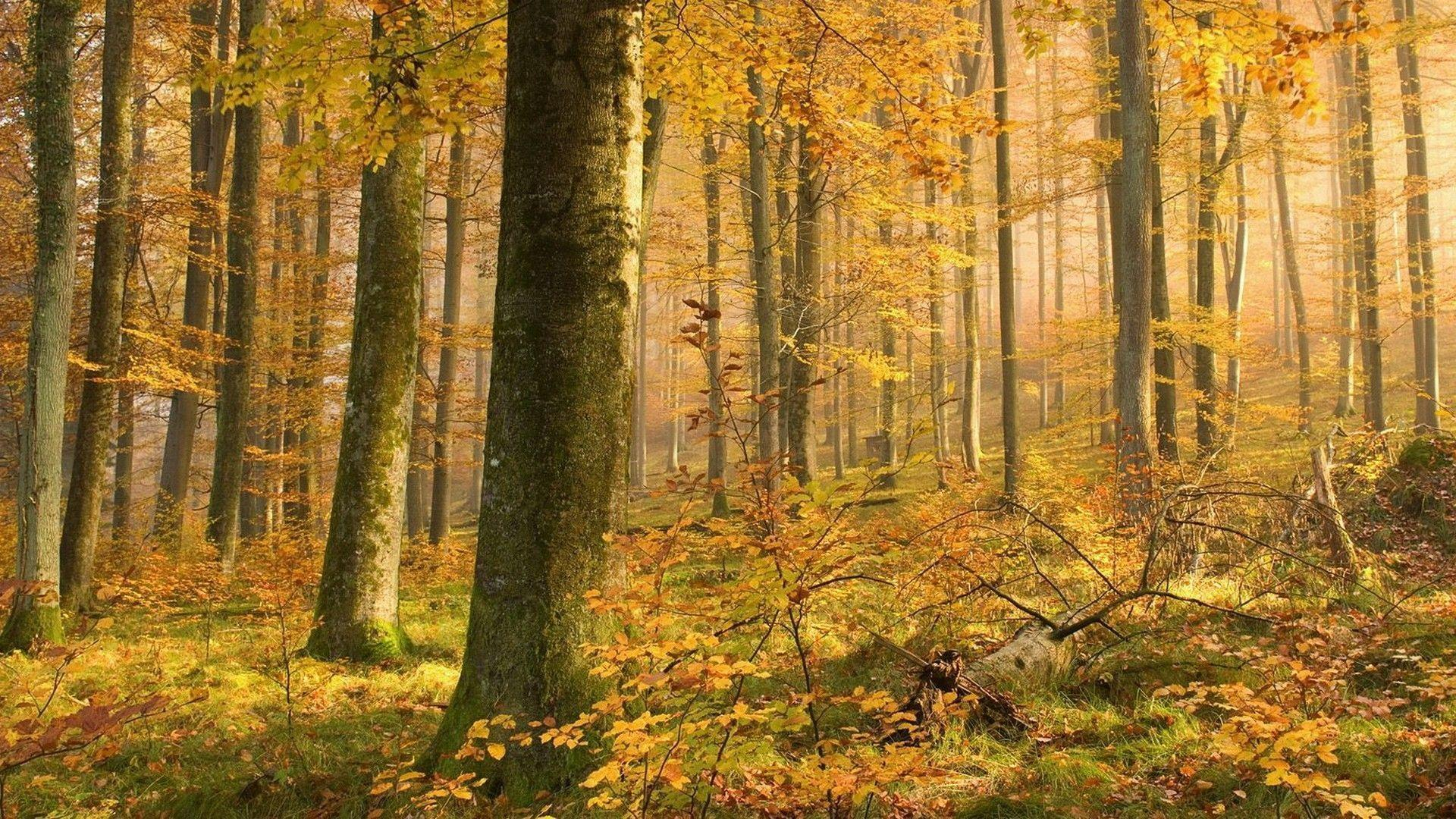 fall woods backgrounds wallpapers - photo #2