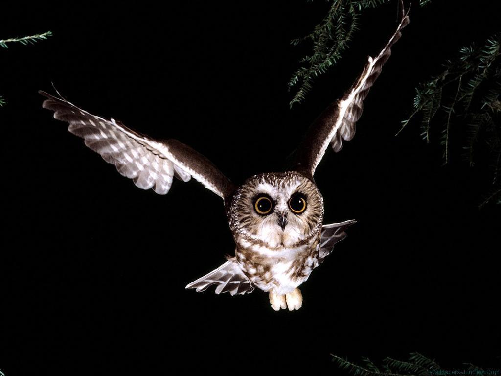 夜空を飛び立つフクロウの壁紙