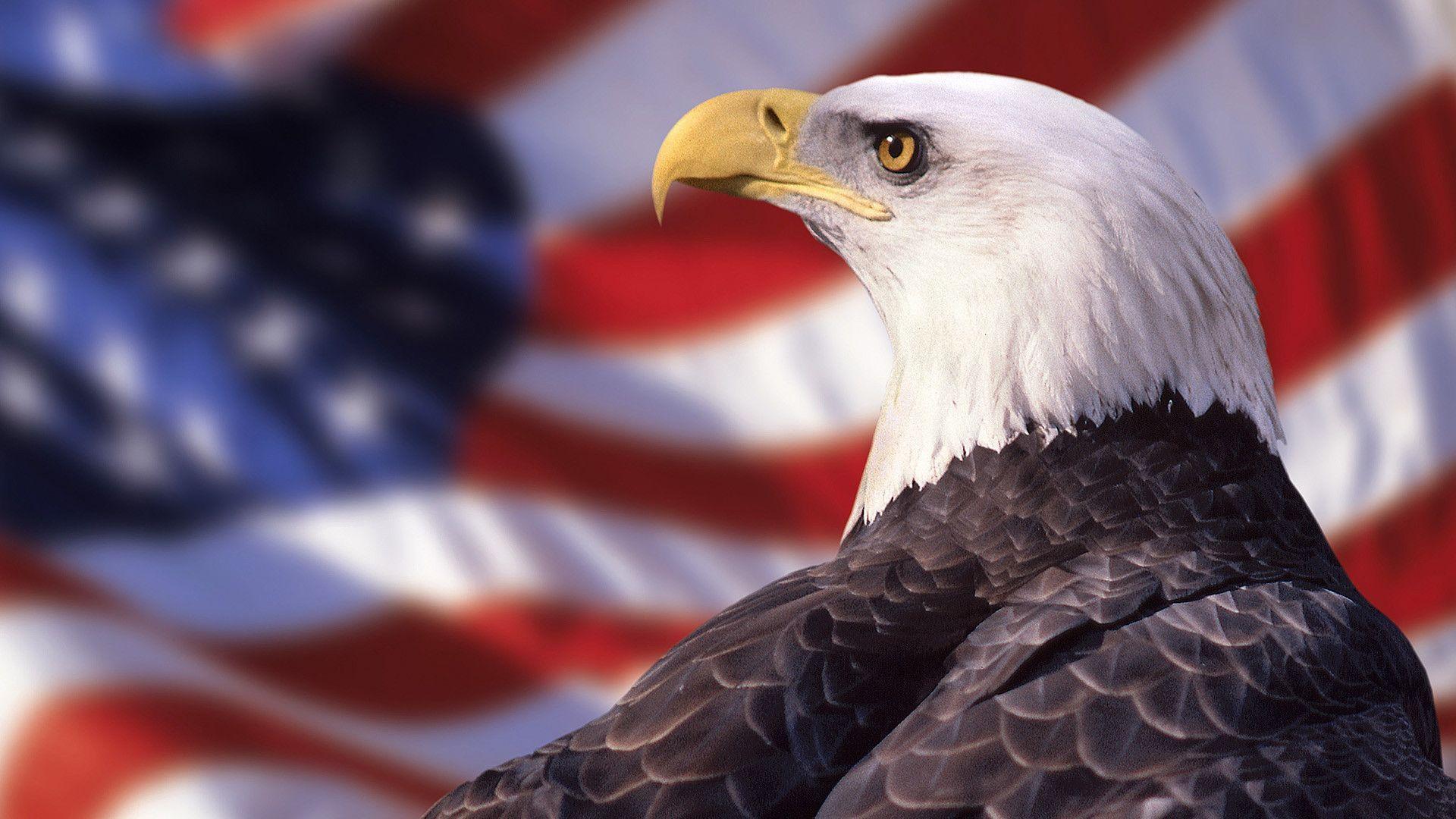 Bald Eagle American Flag Wallpaper