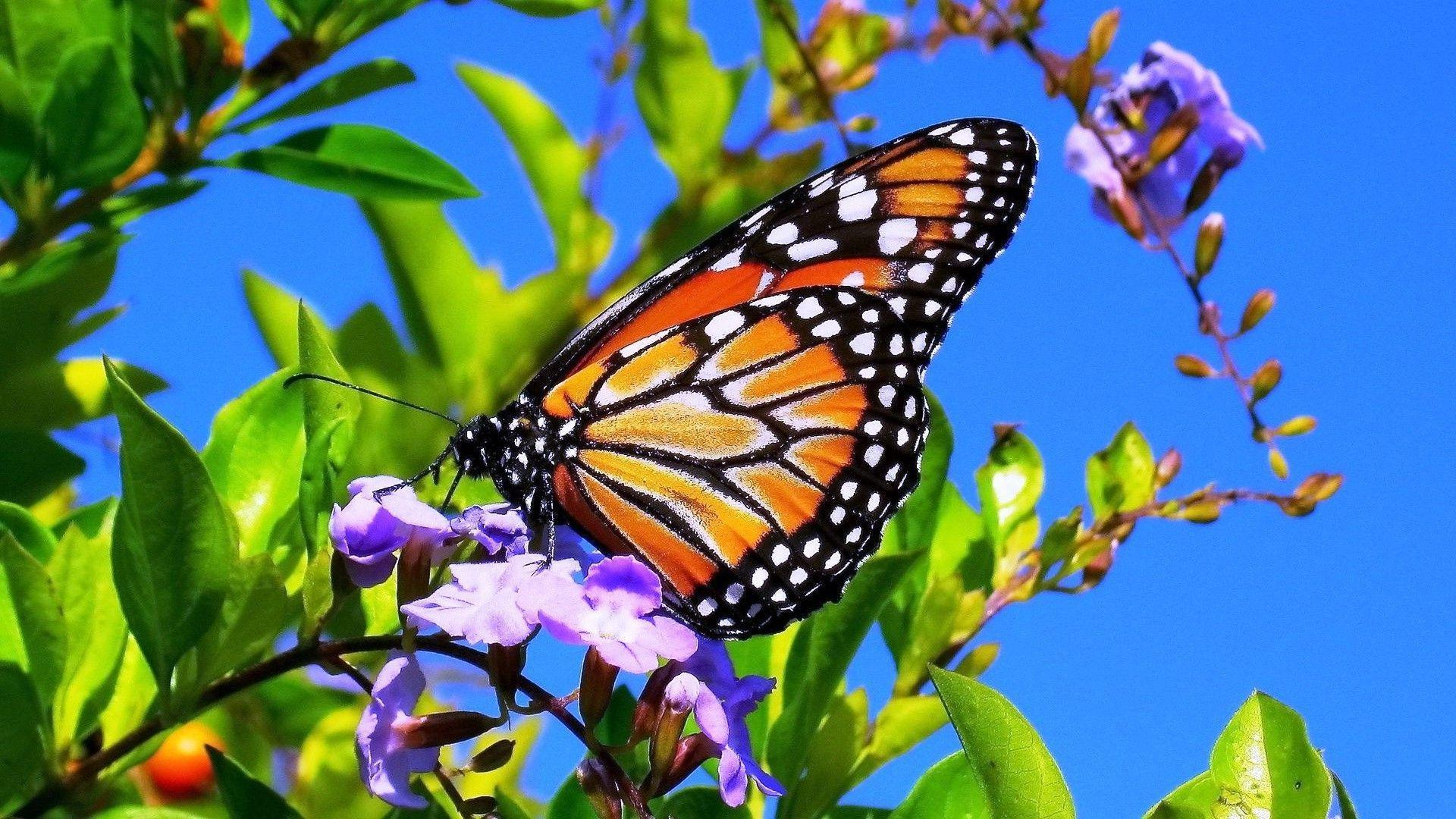 New Butterflies And Flowers Background Images Top Collection Of