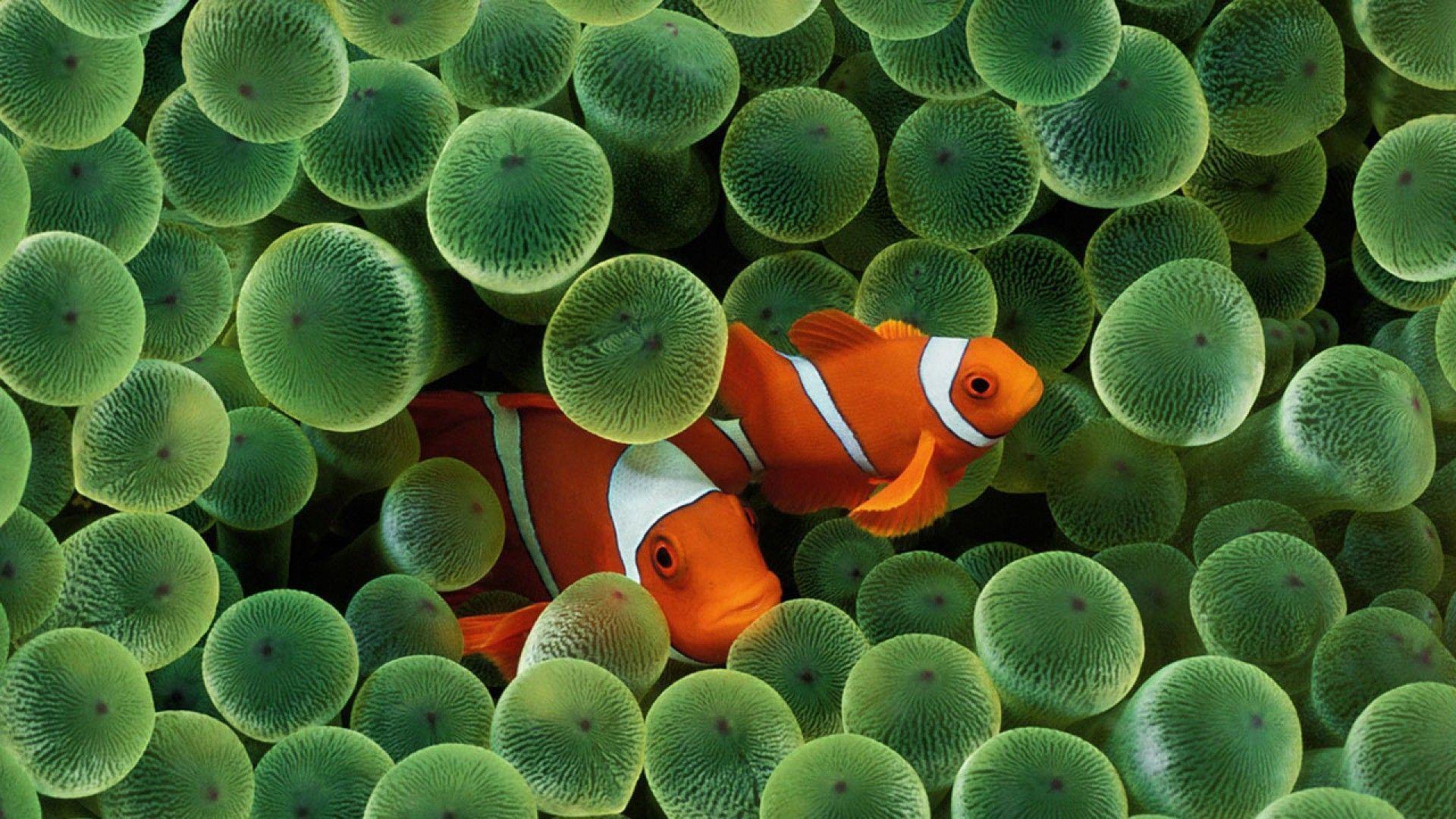green fish wallpaper for phone - photo #8