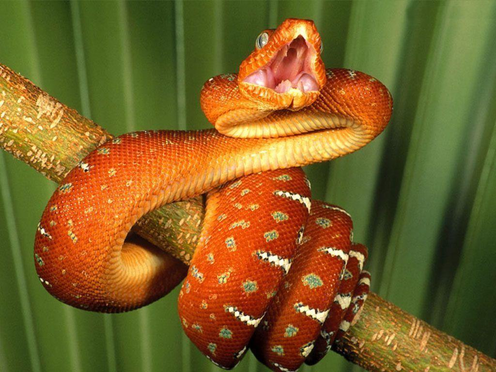Best Jungle Life: Deadly Snake Wallpapers And Pictures