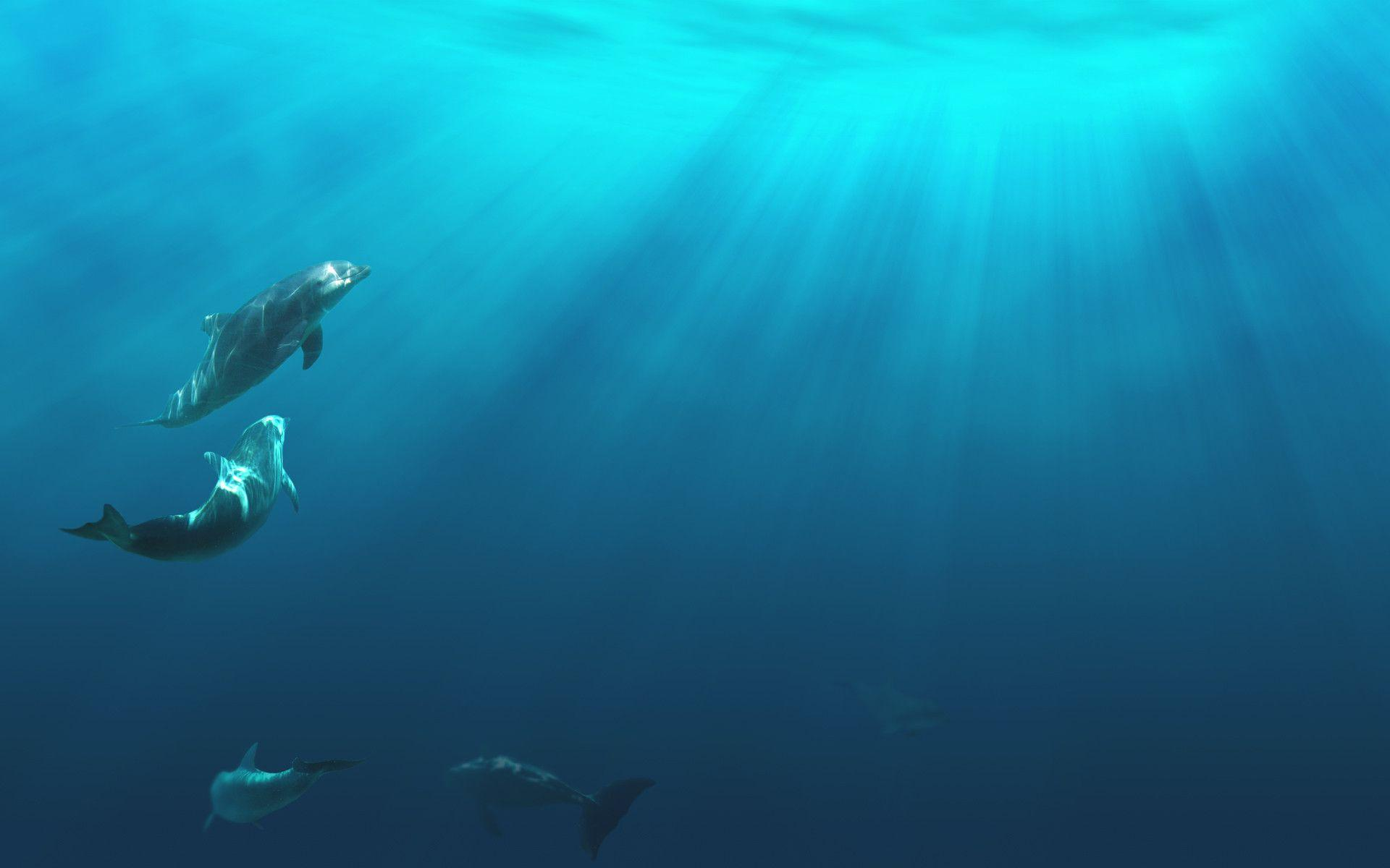 ocean wallpaper underwater water wallpapers wallpaper cave 156
