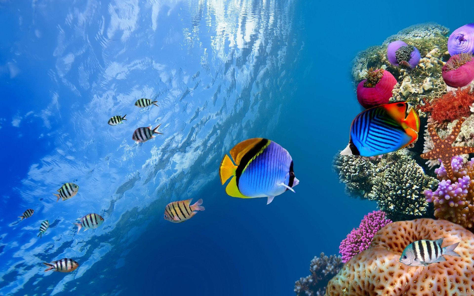 Freshwater Tropical Fish HD Wallpapers