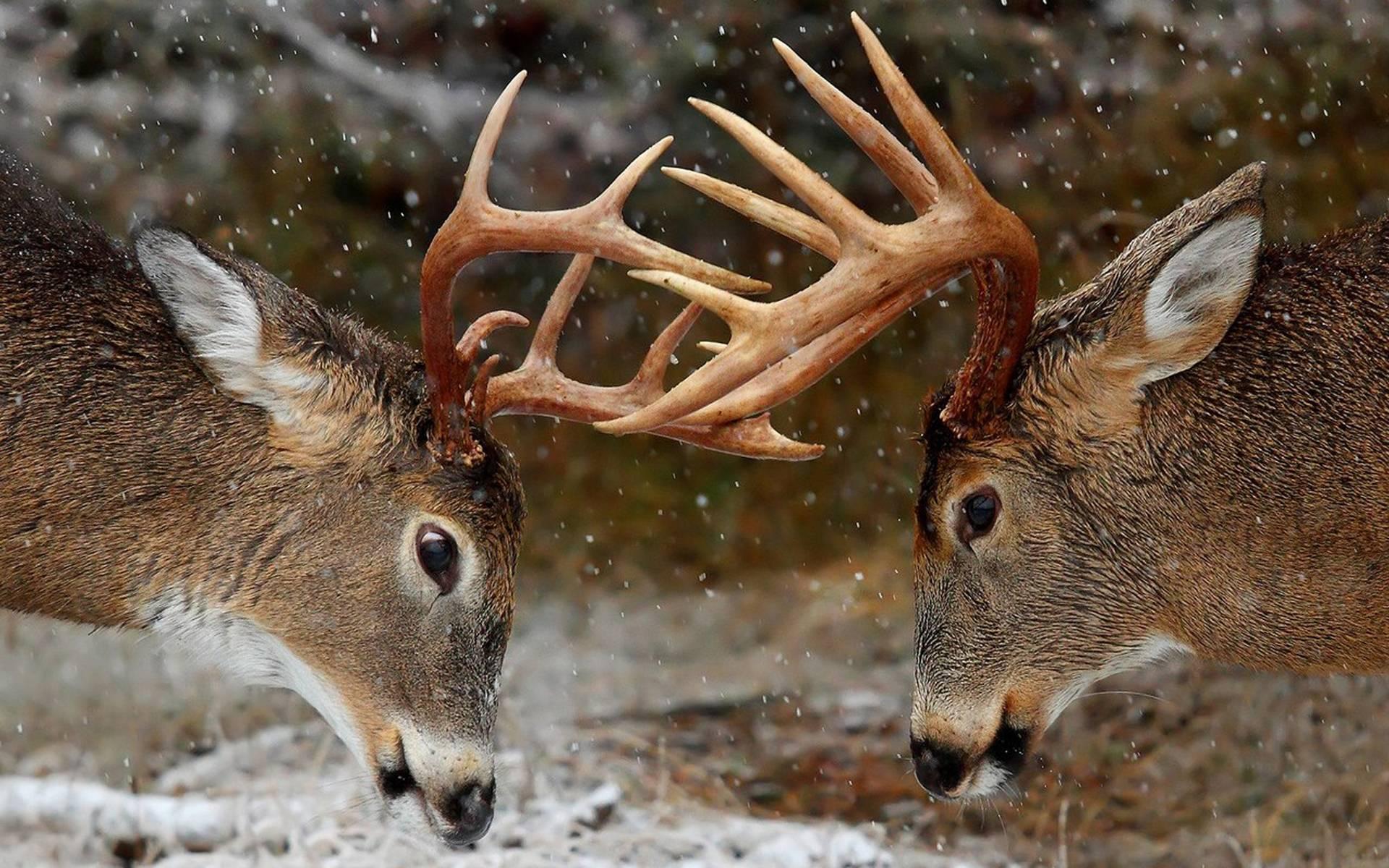 deer wallpaper for my desktop - photo #24