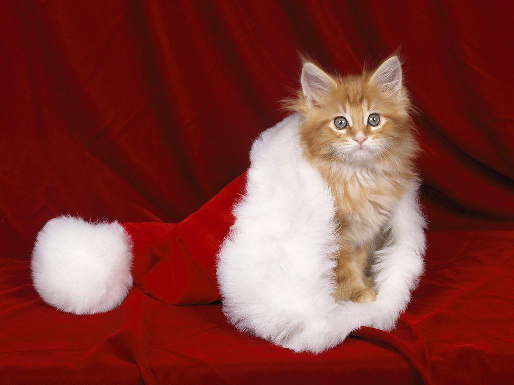 Xmas Stuff For > Christmas Kittens Wallpaper