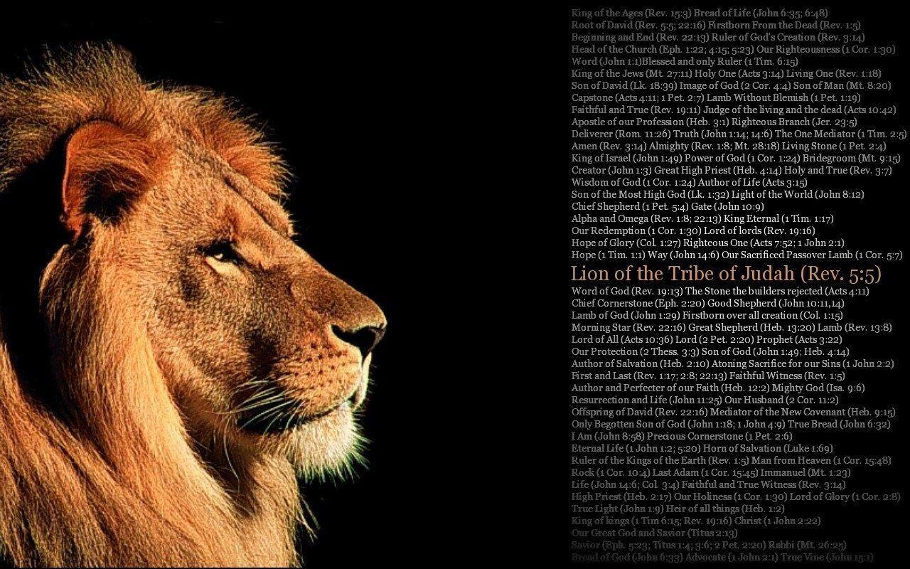 Lion Of Judah Wallpapers 20090 Wallpapers