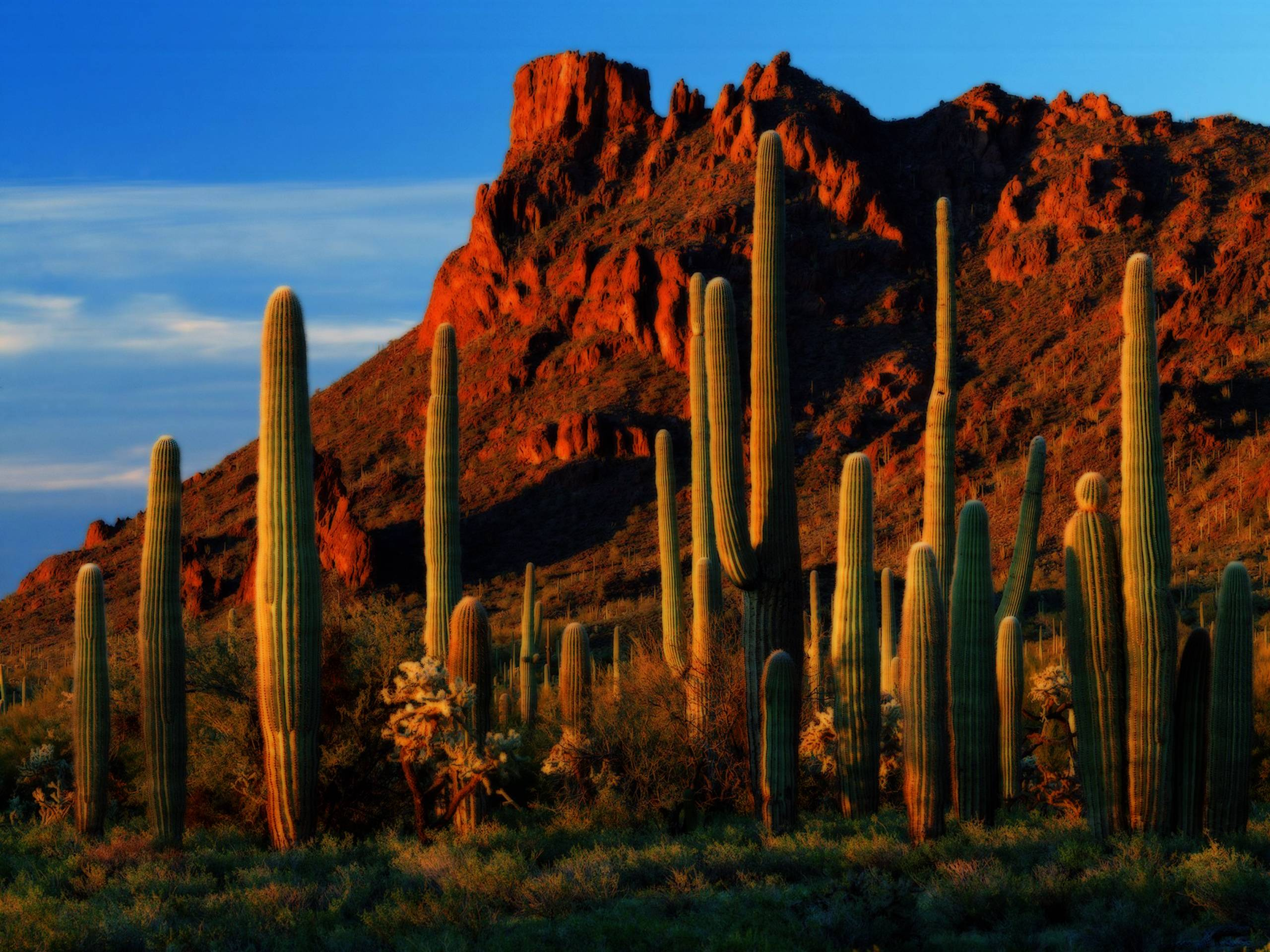 hd cactus wallpapers - photo #34