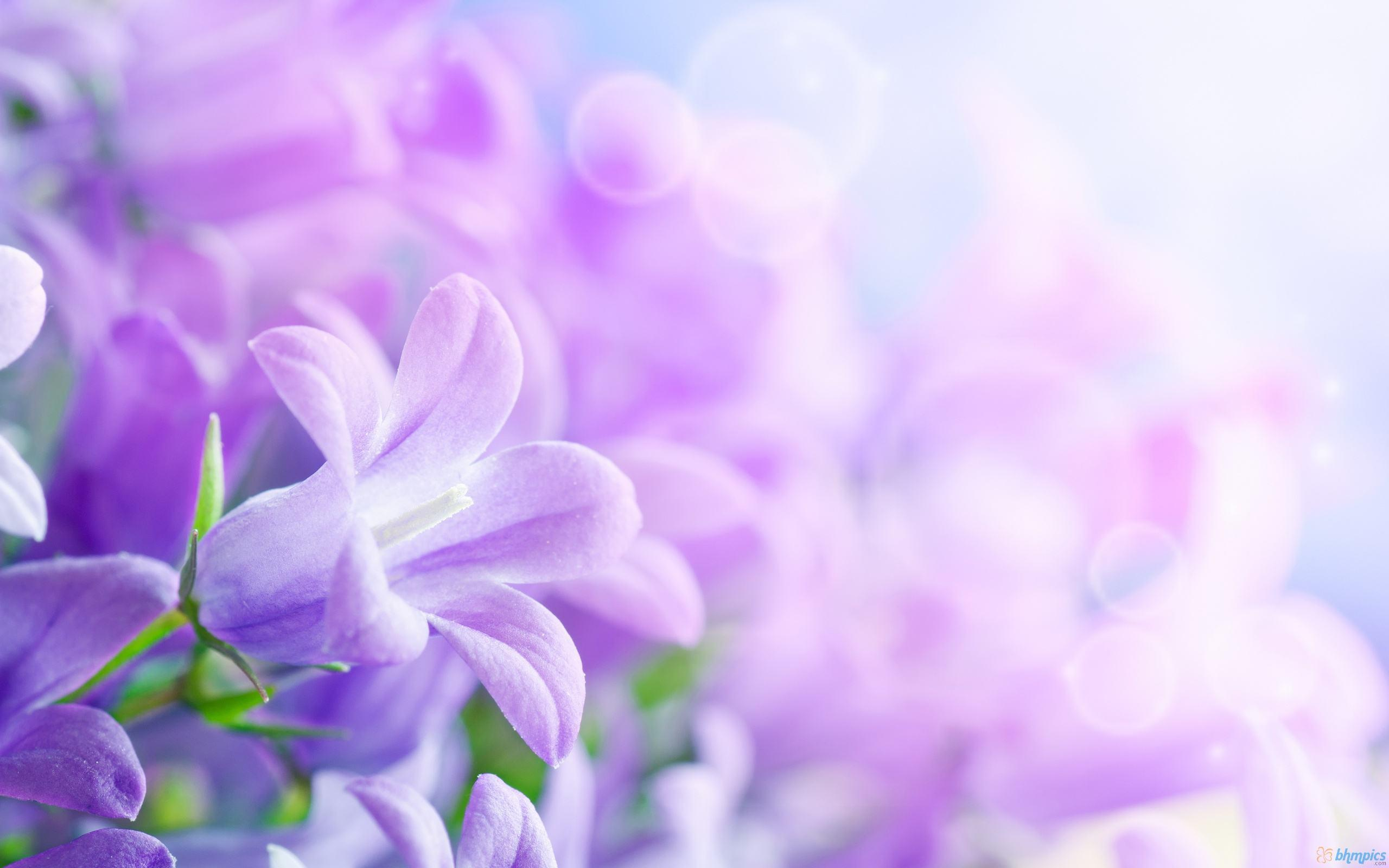 purple flowers backgrounds - wallpaper cave