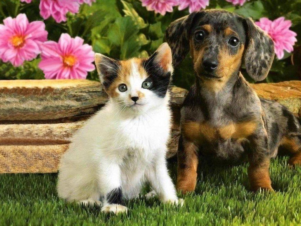 Cute Puppies And Kittens Wallpaper: Puppies And Kittens Wallpapers