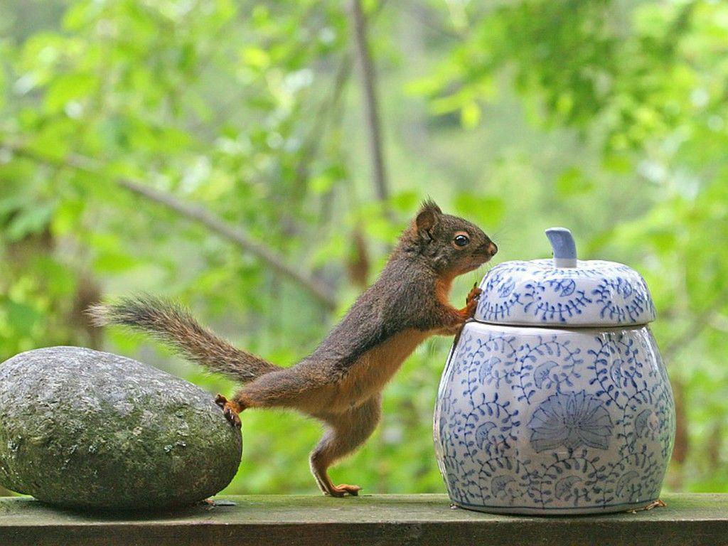 smart squirrel wallpaper - Animal Backgrounds