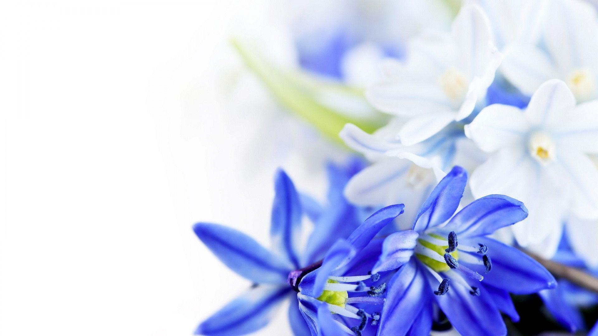 Blue flower wallpapers wallpaper cave blue and white flower flower wallpapers wholles mightylinksfo