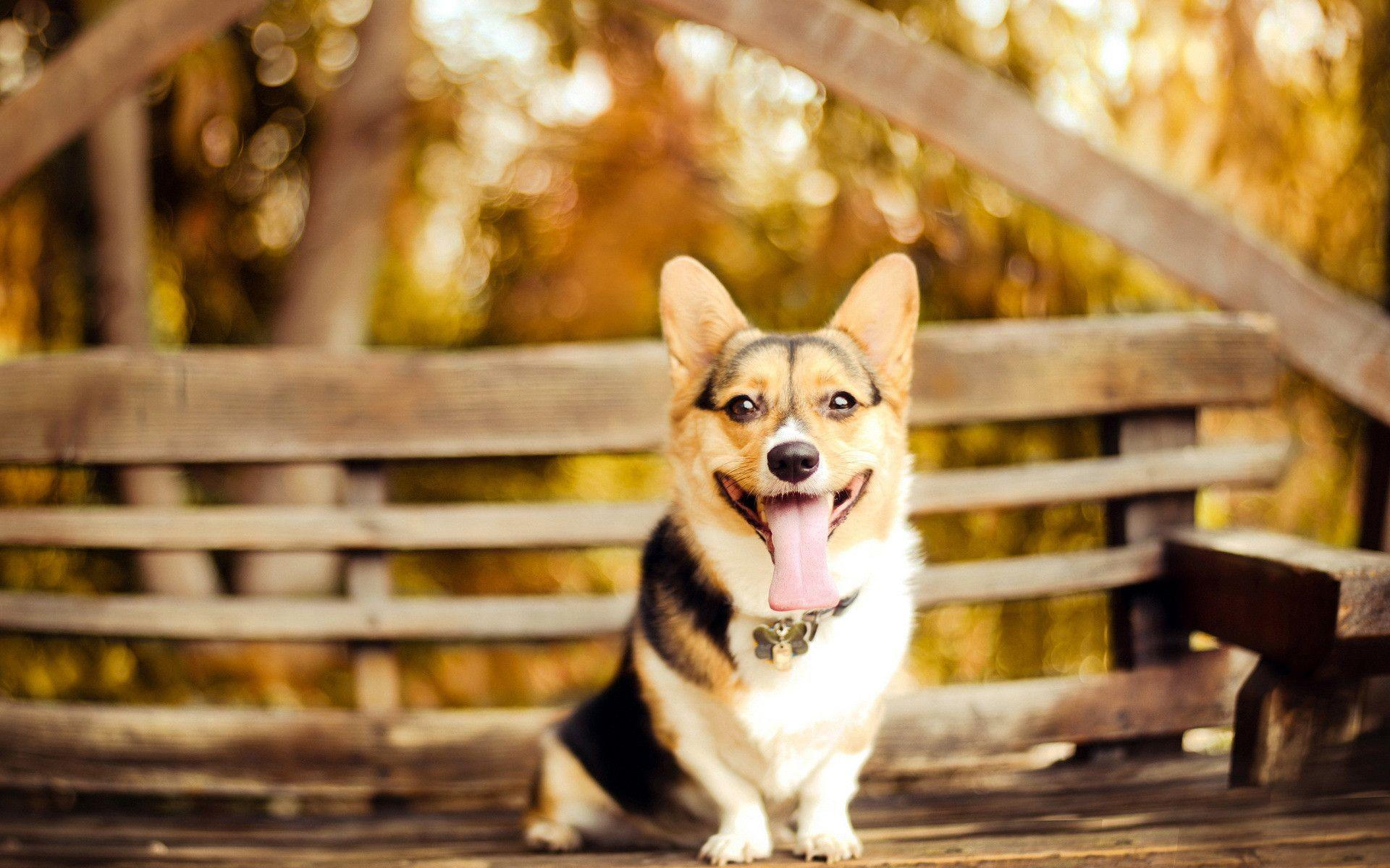 cool dog backgrounds wallpaper cave