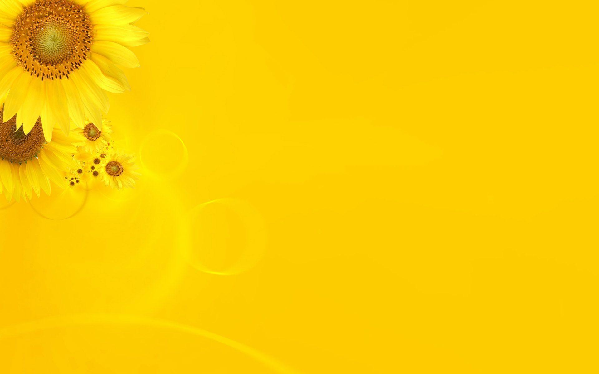 Wallpapers For > Bright Yellow Backgrounds