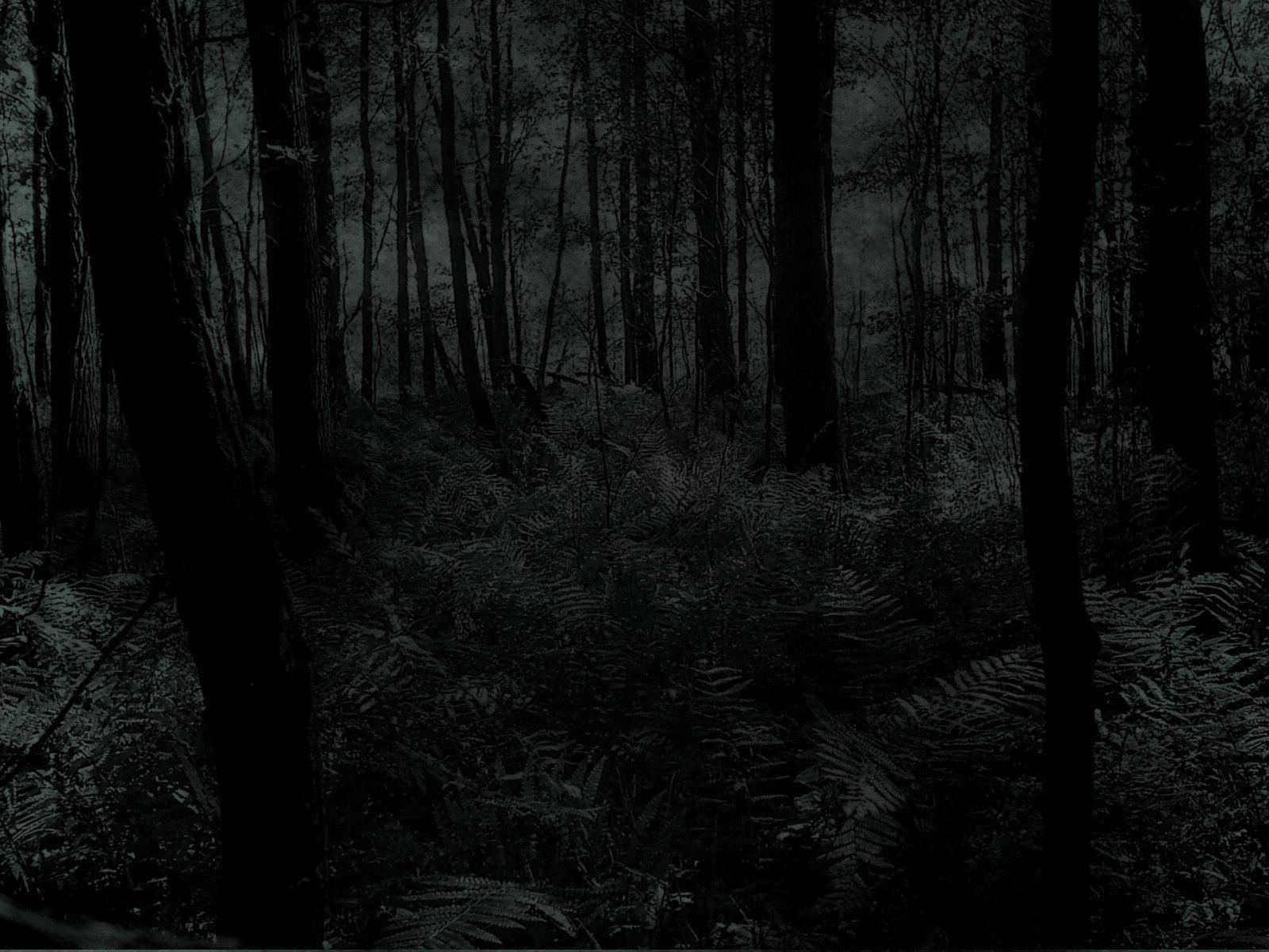 Wallpapers For > Dark Forest Background With Moon