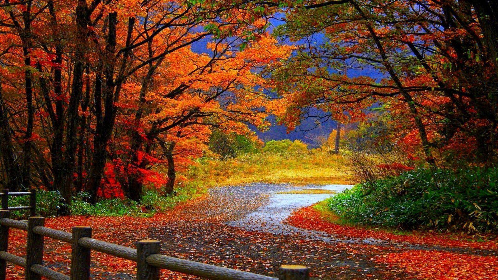 Fall Background Pics Wallpaper Cave