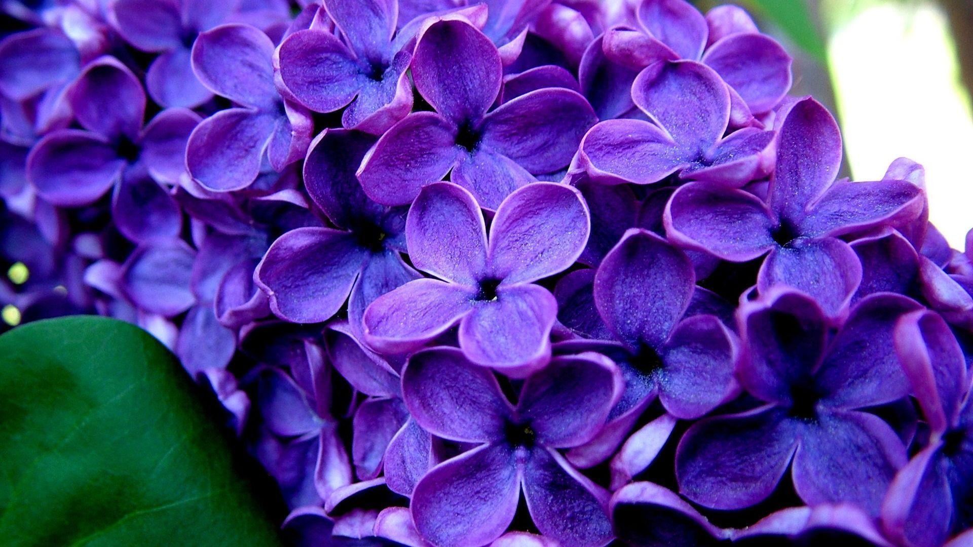 Purple Flowers Wallpapers - Wallpaper Cave