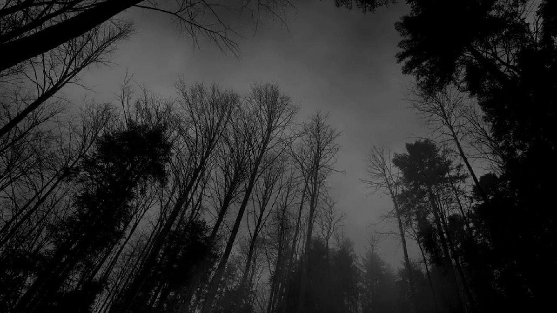 Image - Forest-black-white-dark-forest-wallpaper.jpg – Creepypasta ...