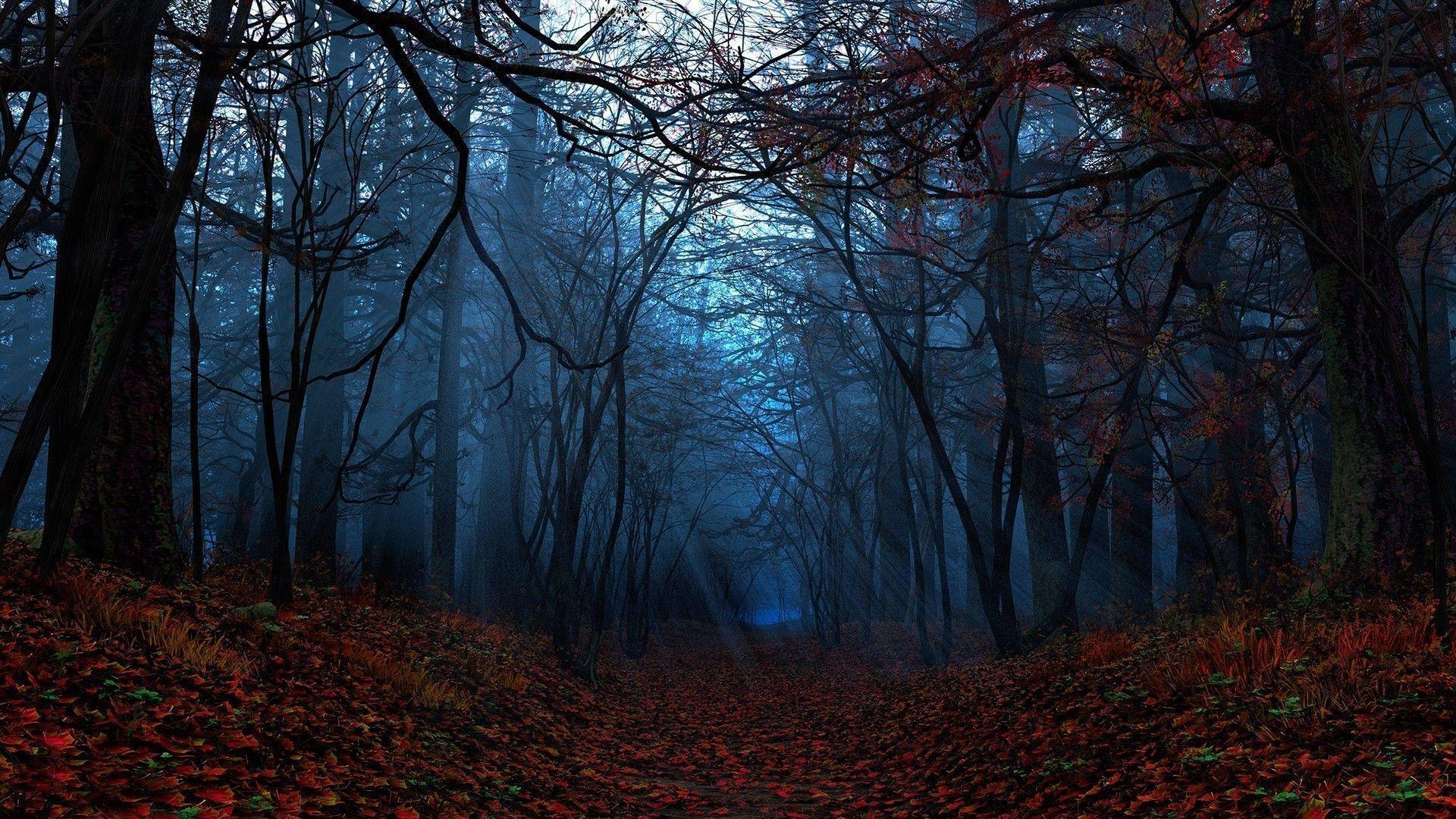 dark forest widescreen wallpaper - photo #37