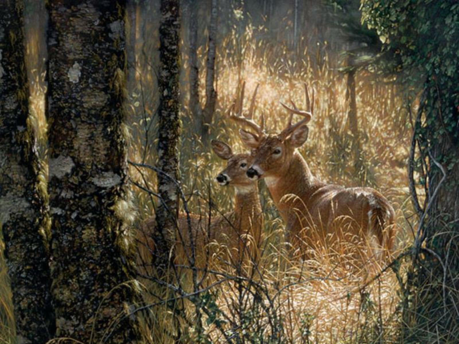 deer wallpaper for my desktop - photo #11