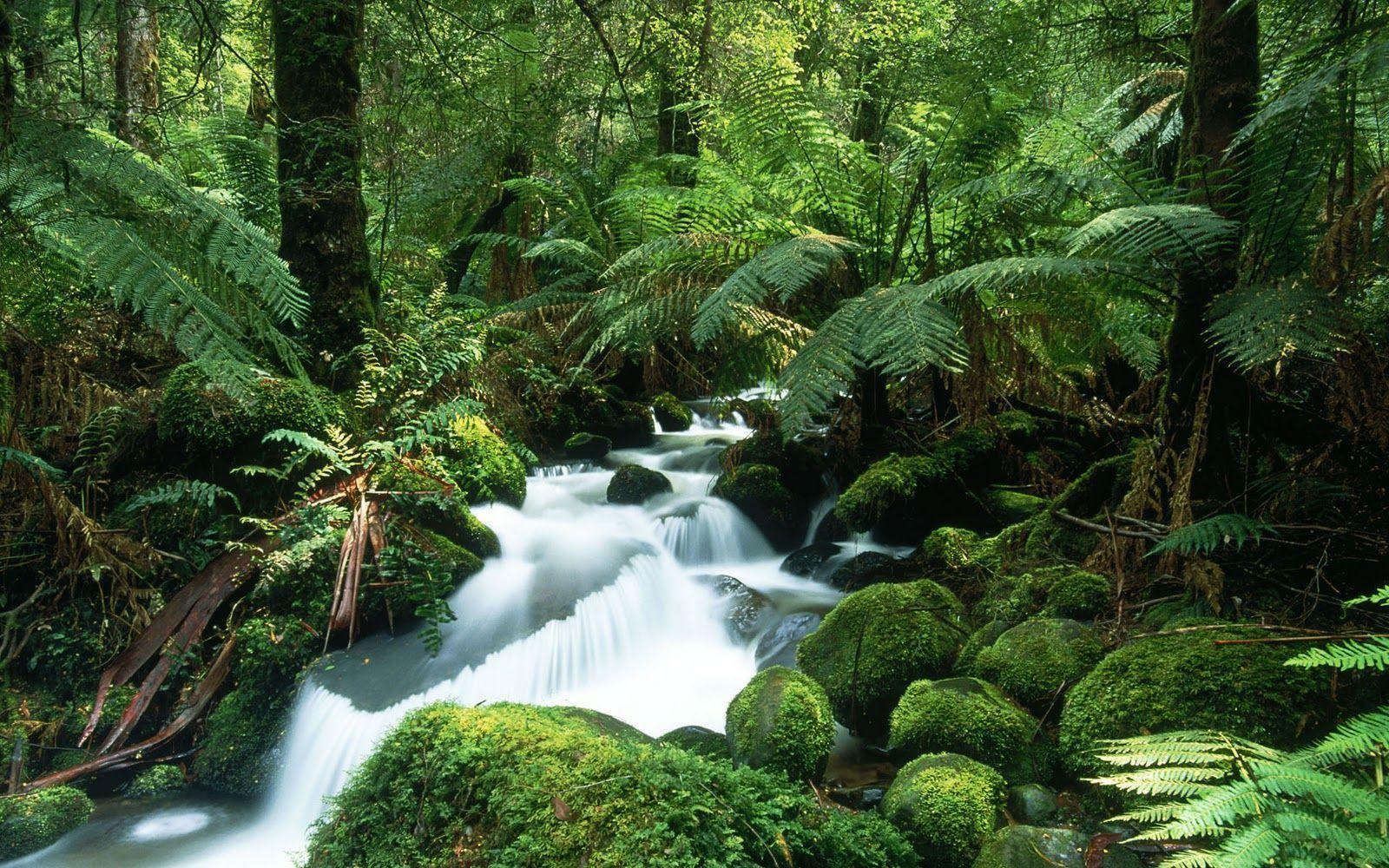 amazon rainforest 1240 hd wallpapers backgrounds