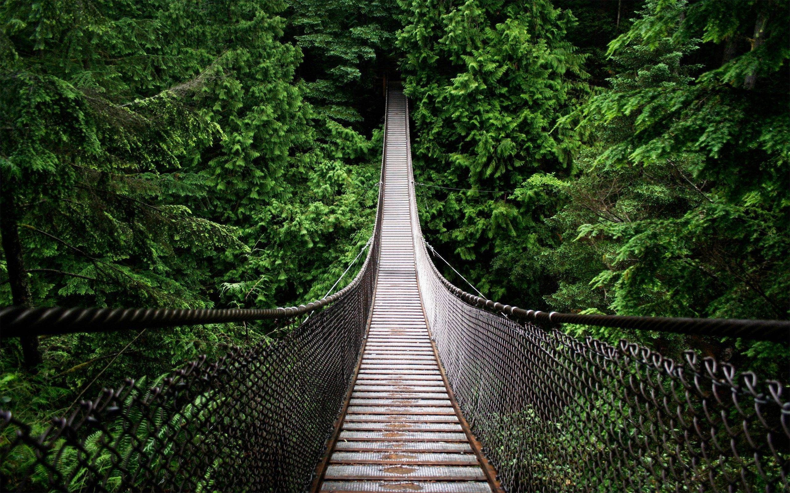 Hanged Bridge in the Jungle Wallpapers and Stock Photo