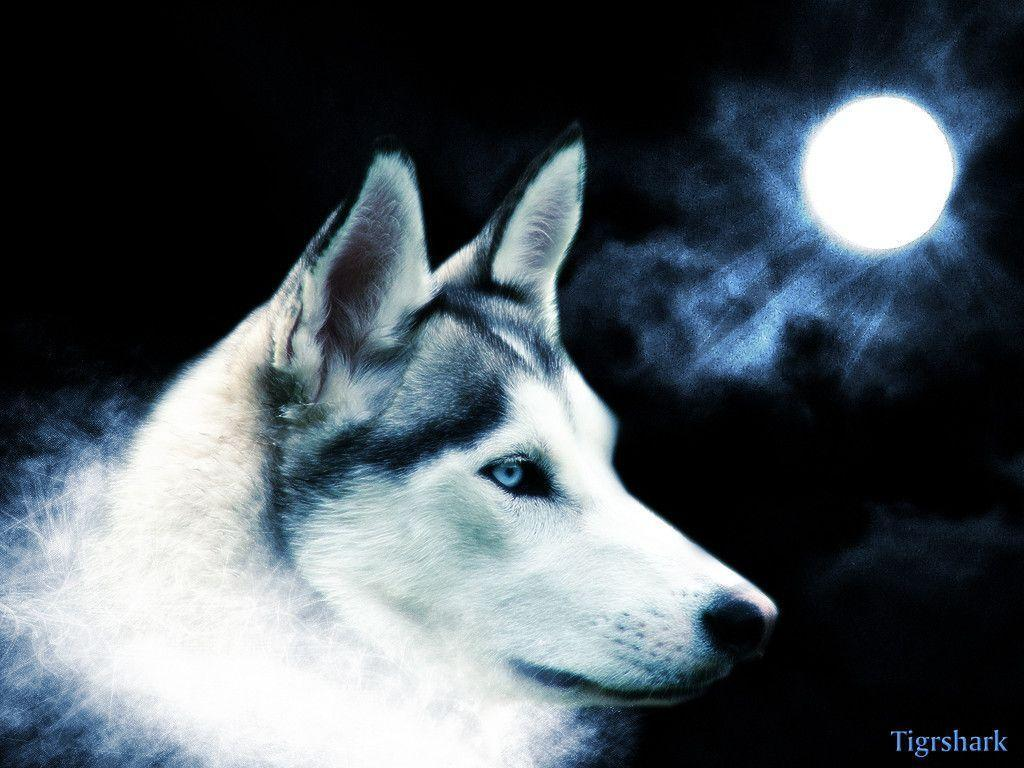 Beautiful Wolf Wallpapers Wallpaper Cave