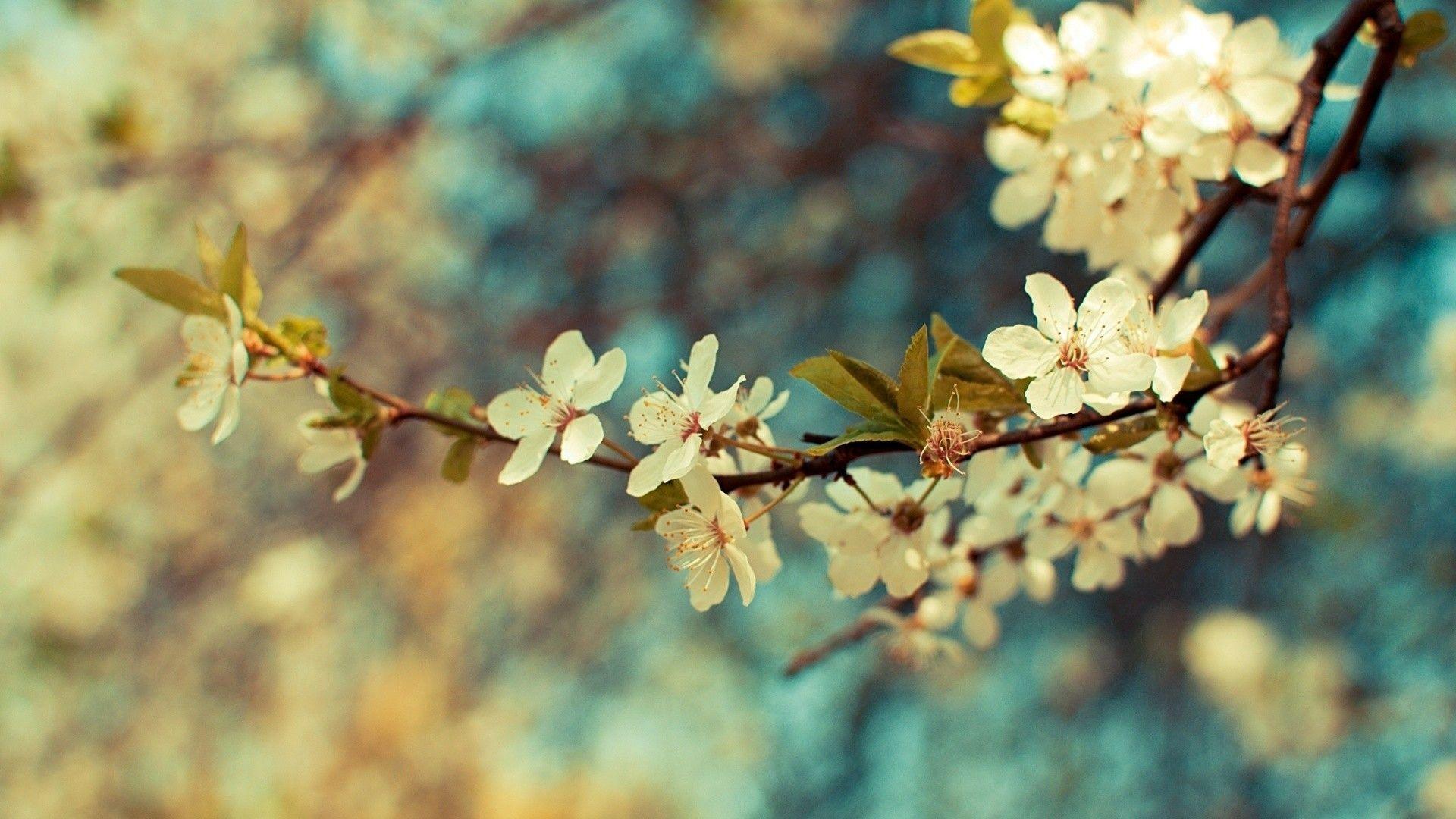 Top best Flower wallpaper ideas on Pinterest Screensaver
